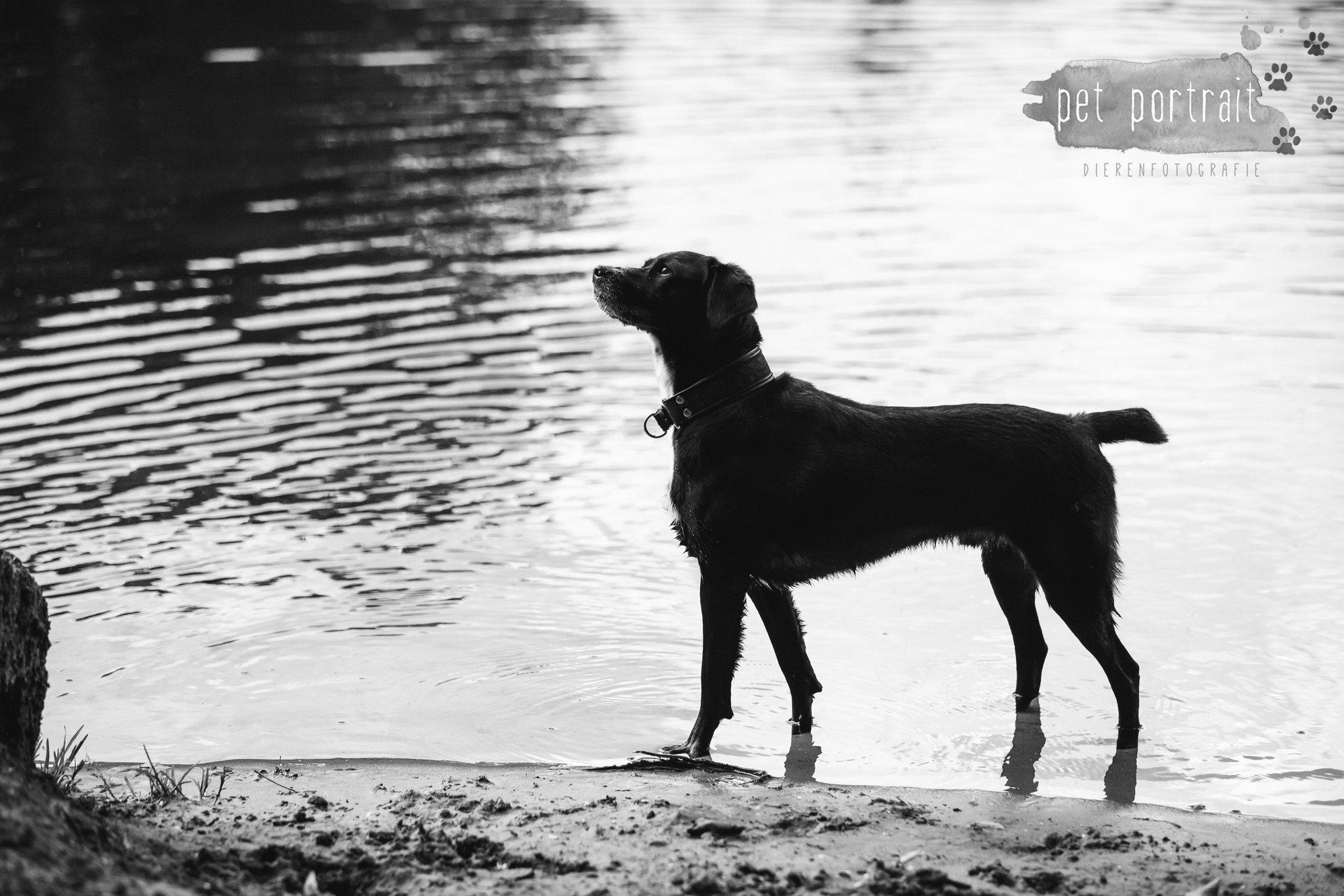 Hondenfotograaf Heemstede - Fotoshoot in het bos-15