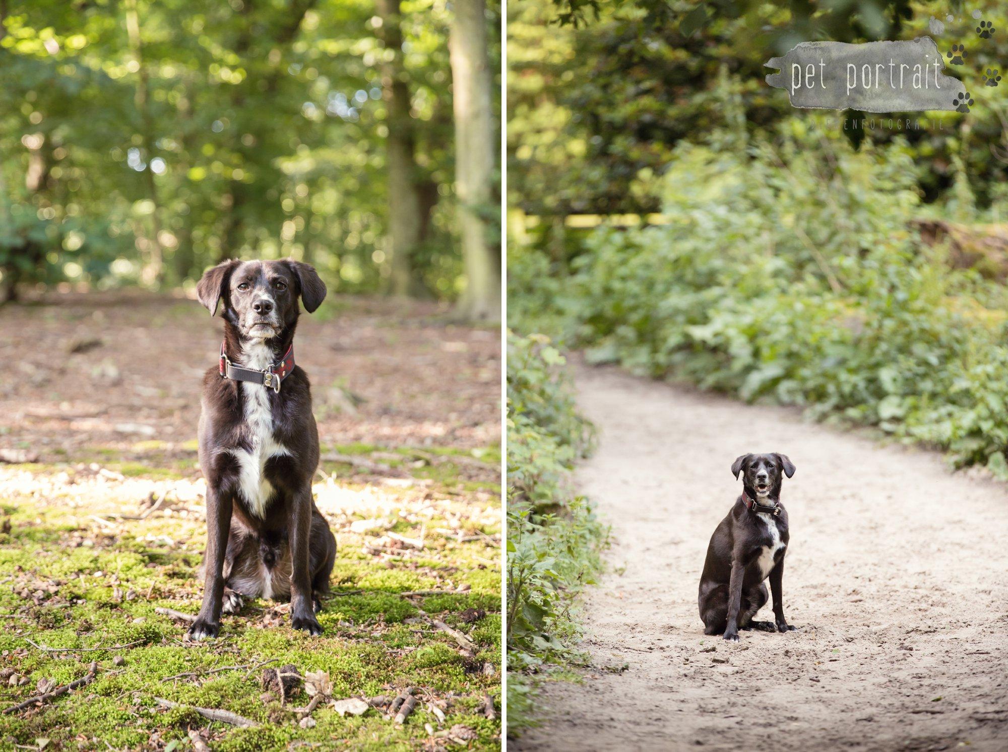 Hondenfotograaf Heemstede - Fotoshoot in het bos-2