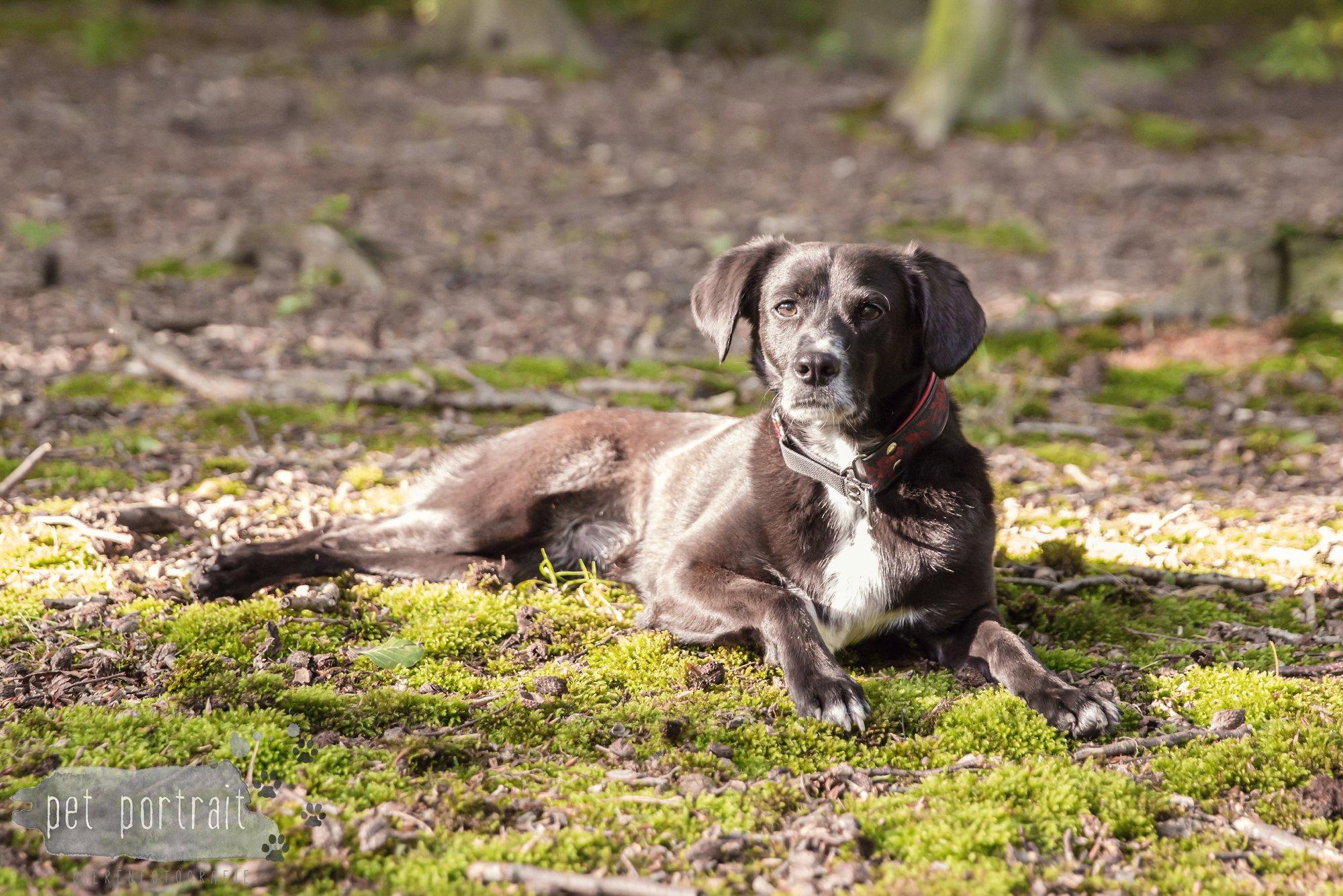 Hondenfotograaf Heemstede - Fotoshoot in het bos-3