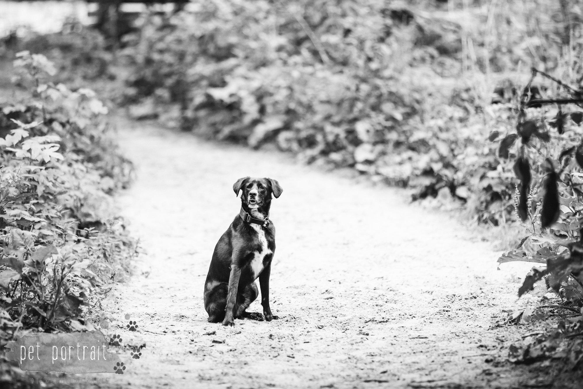 Hondenfotograaf Heemstede - Fotoshoot in het bos-5