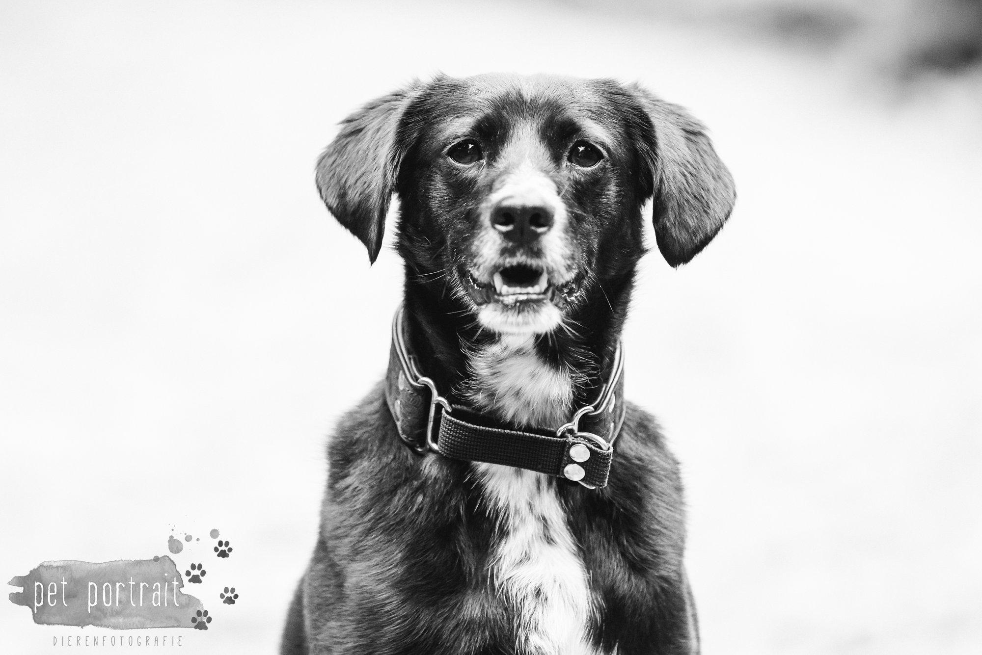 Hondenfotograaf Heemstede - Fotoshoot in het bos-6