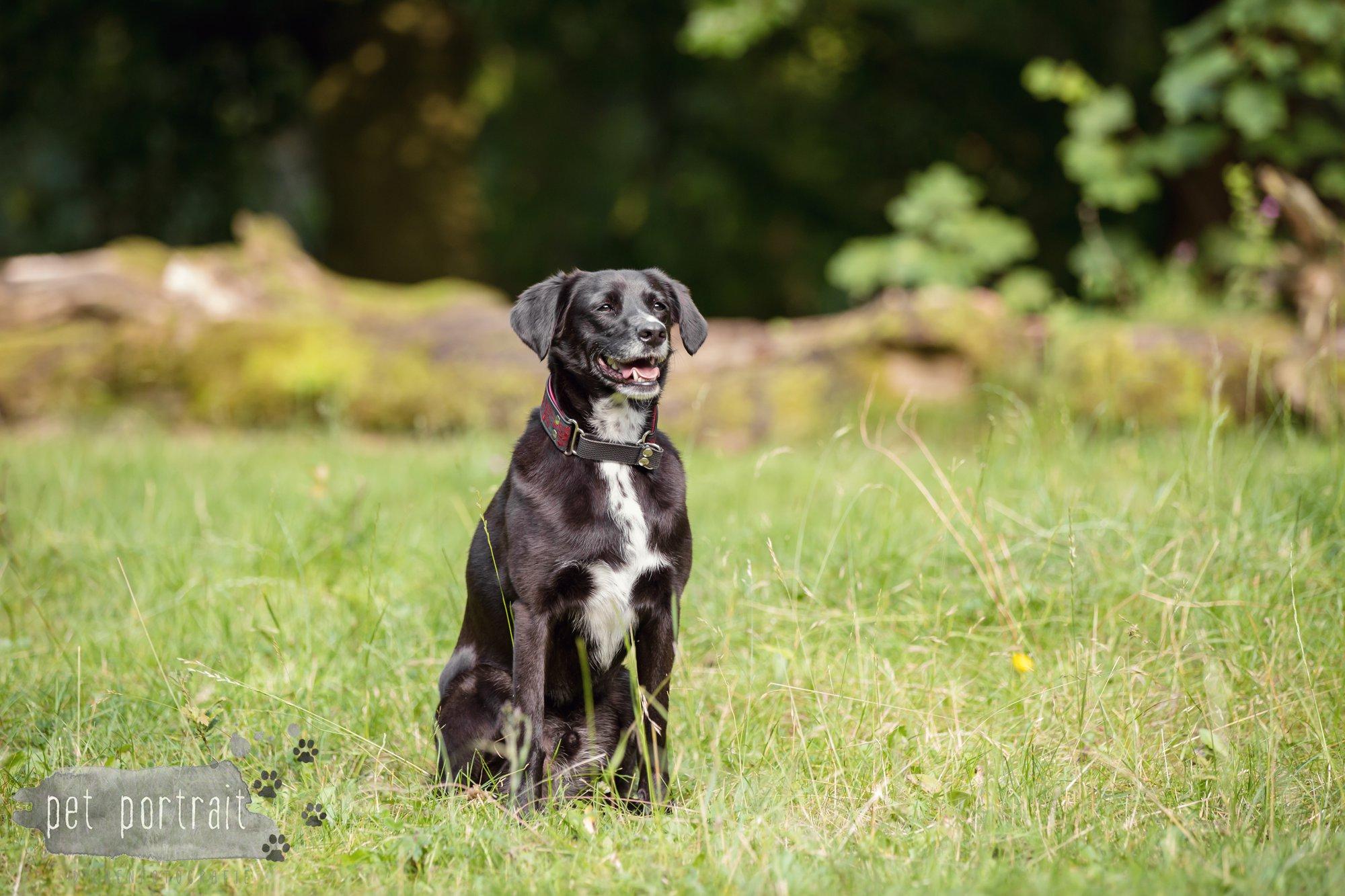 Hondenfotograaf Heemstede - Fotoshoot in het bos-7