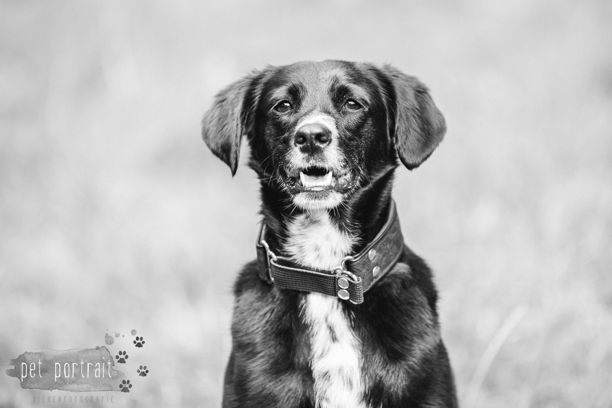 Hondenfotograaf Heemstede - Fotoshoot in het bos-8
