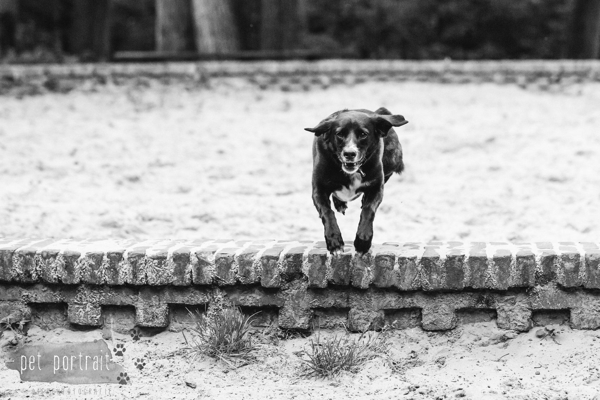 Hondenfotograaf Heemstede - Fotoshoot in het bos-9