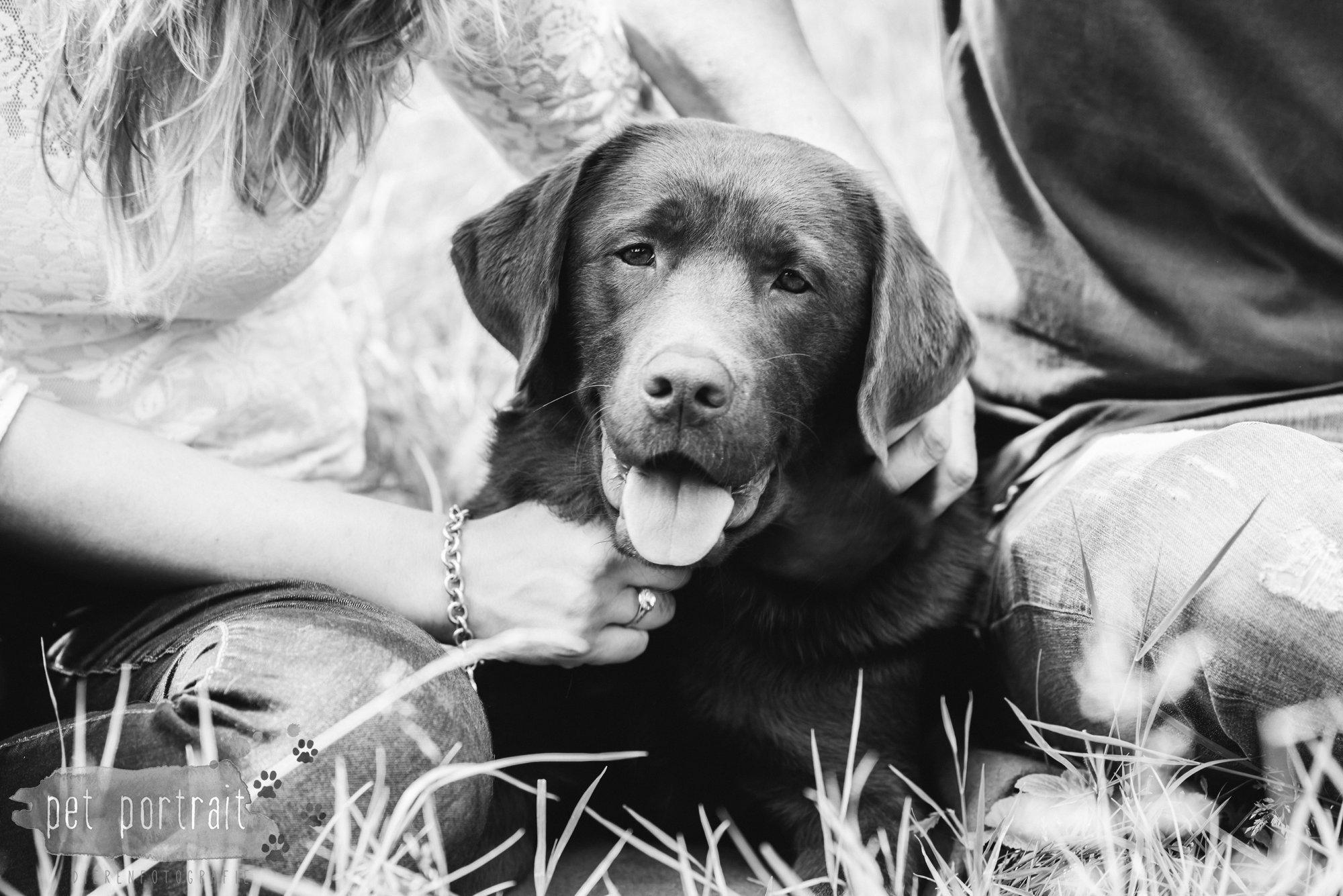 Hondenfotograaf Lelystad - Beloved Dier en Baasje fotoshoot-12