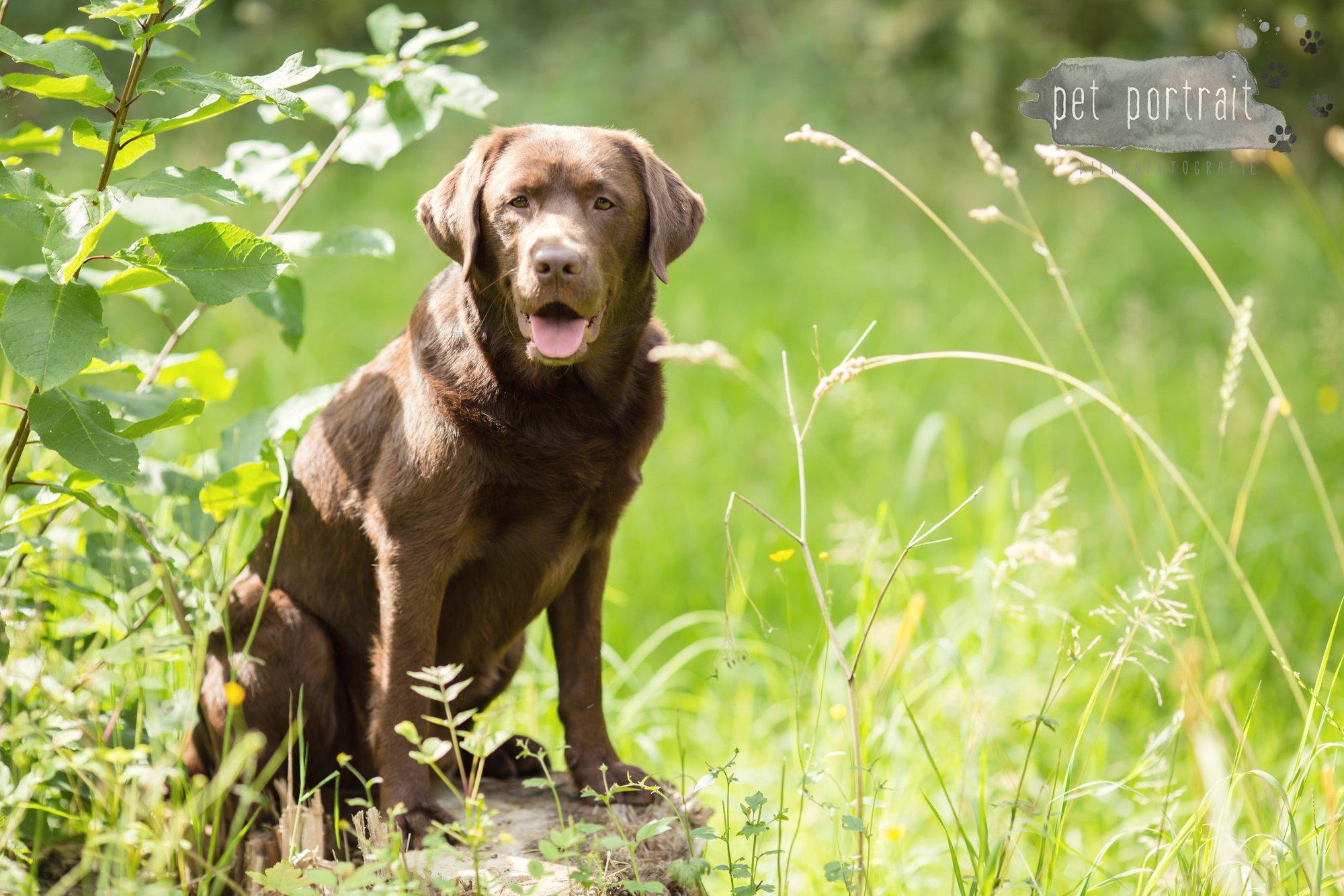 Hondenfotograaf Lelystad - Beloved Dier en Baasje fotoshoot-13