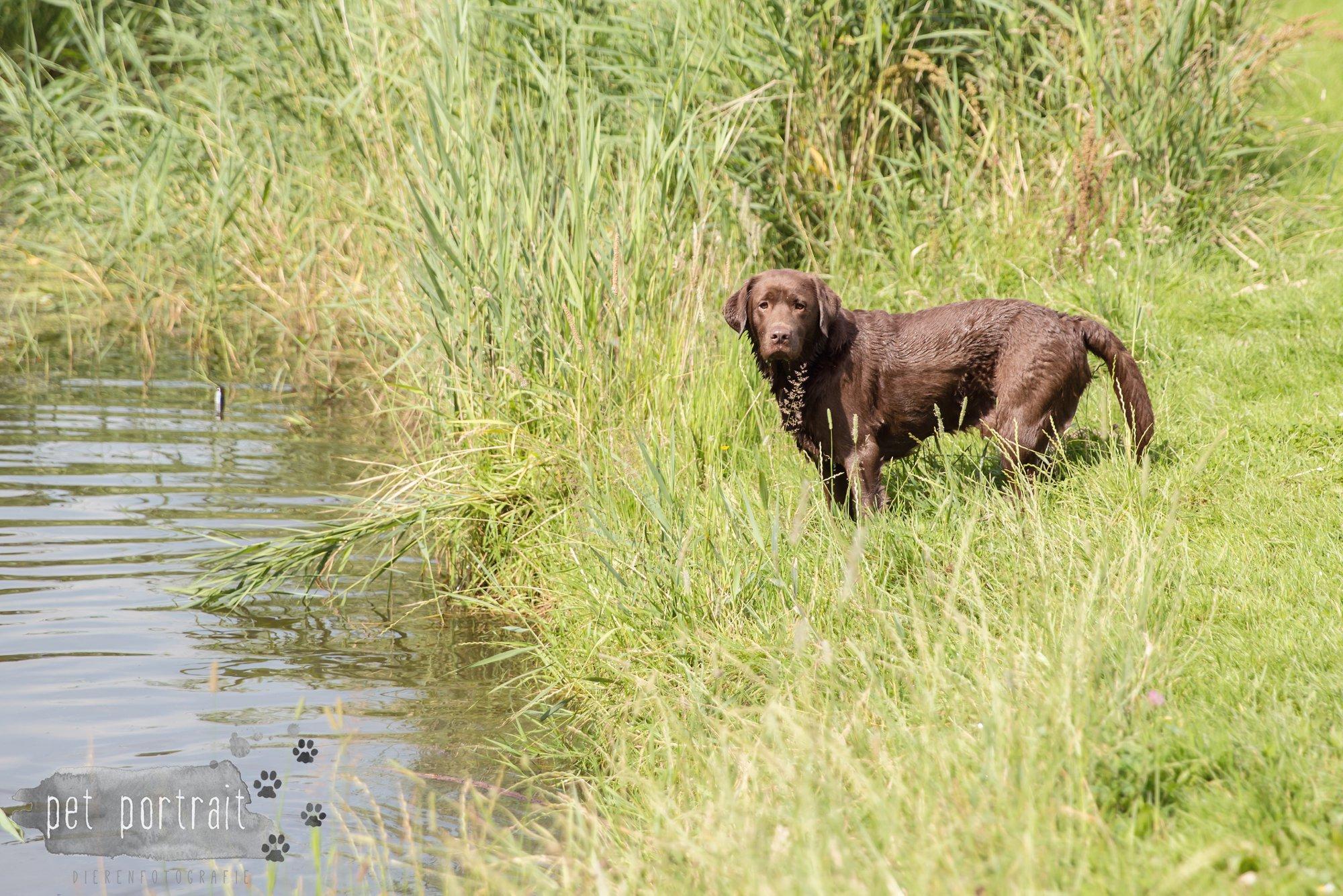 Hondenfotograaf Lelystad - Beloved Dier en Baasje fotoshoot-16