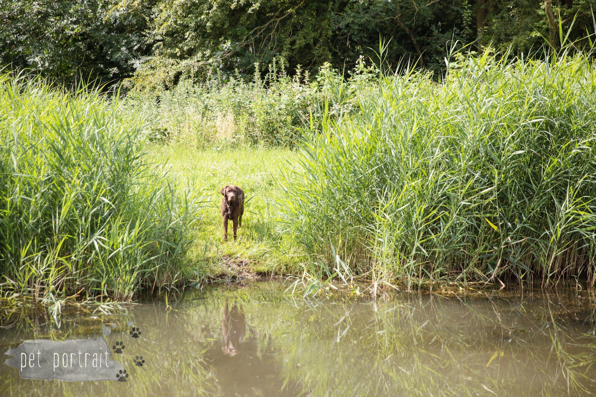 Hondenfotograaf Lelystad - Beloved Dier en Baasje fotoshoot-17