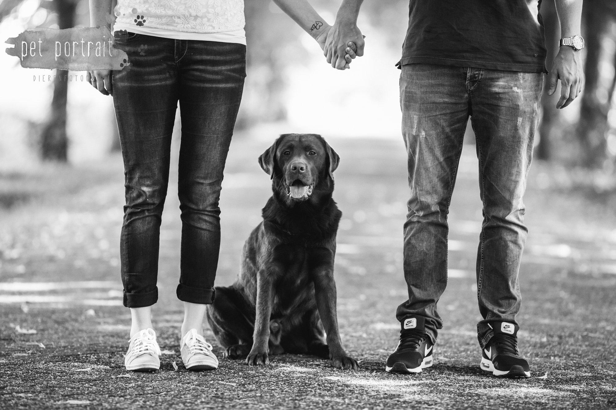 Hondenfotograaf Lelystad - Beloved Dier en Baasje fotoshoot-2