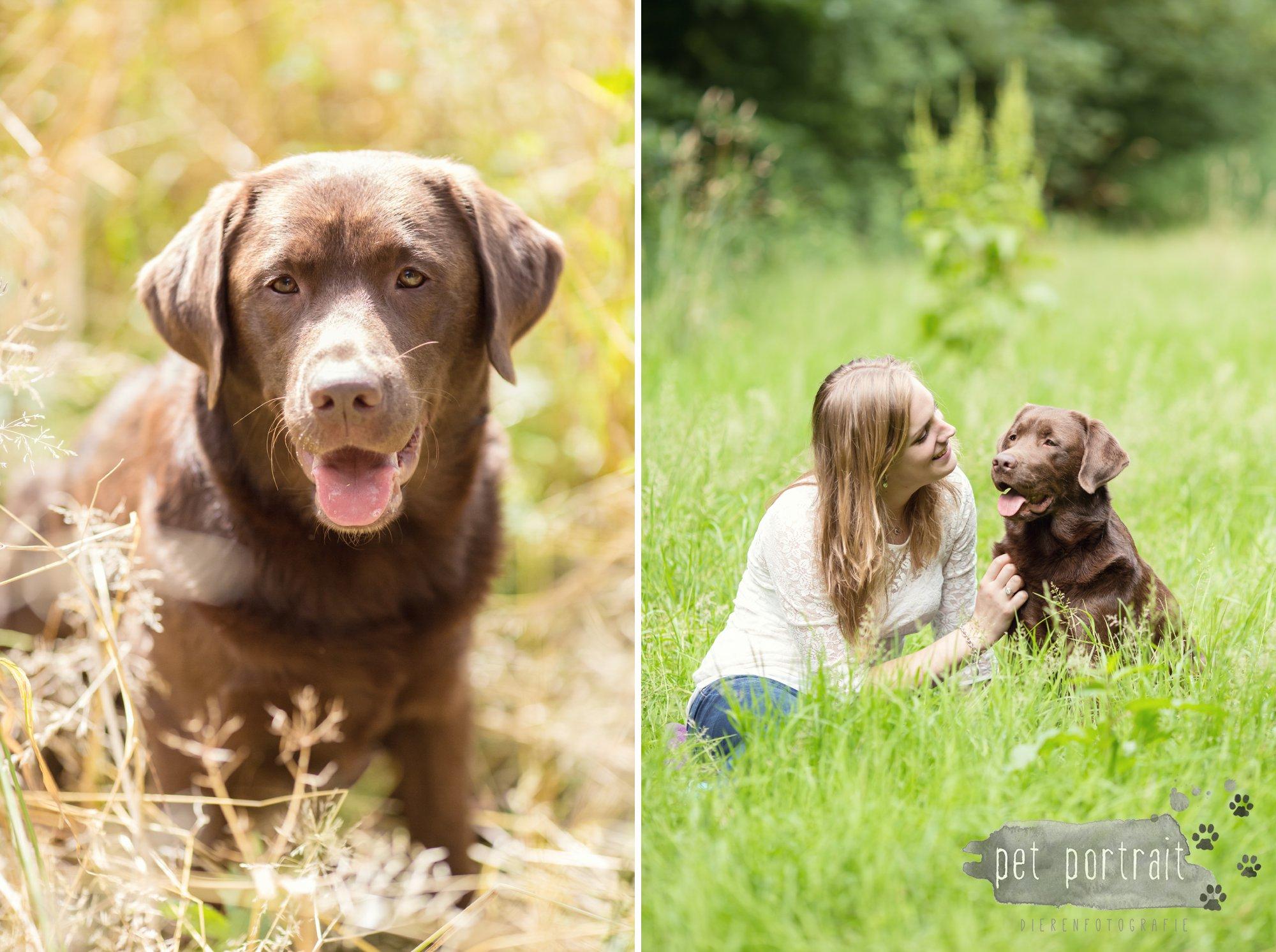 Hondenfotograaf Lelystad - Beloved Dier en Baasje fotoshoot-8