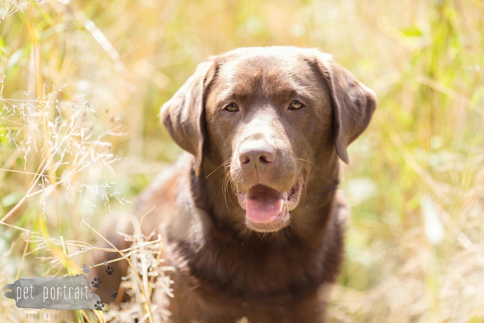 Hondenfotograaf Lelystad - Beloved Dier en Baasje fotoshoot-9