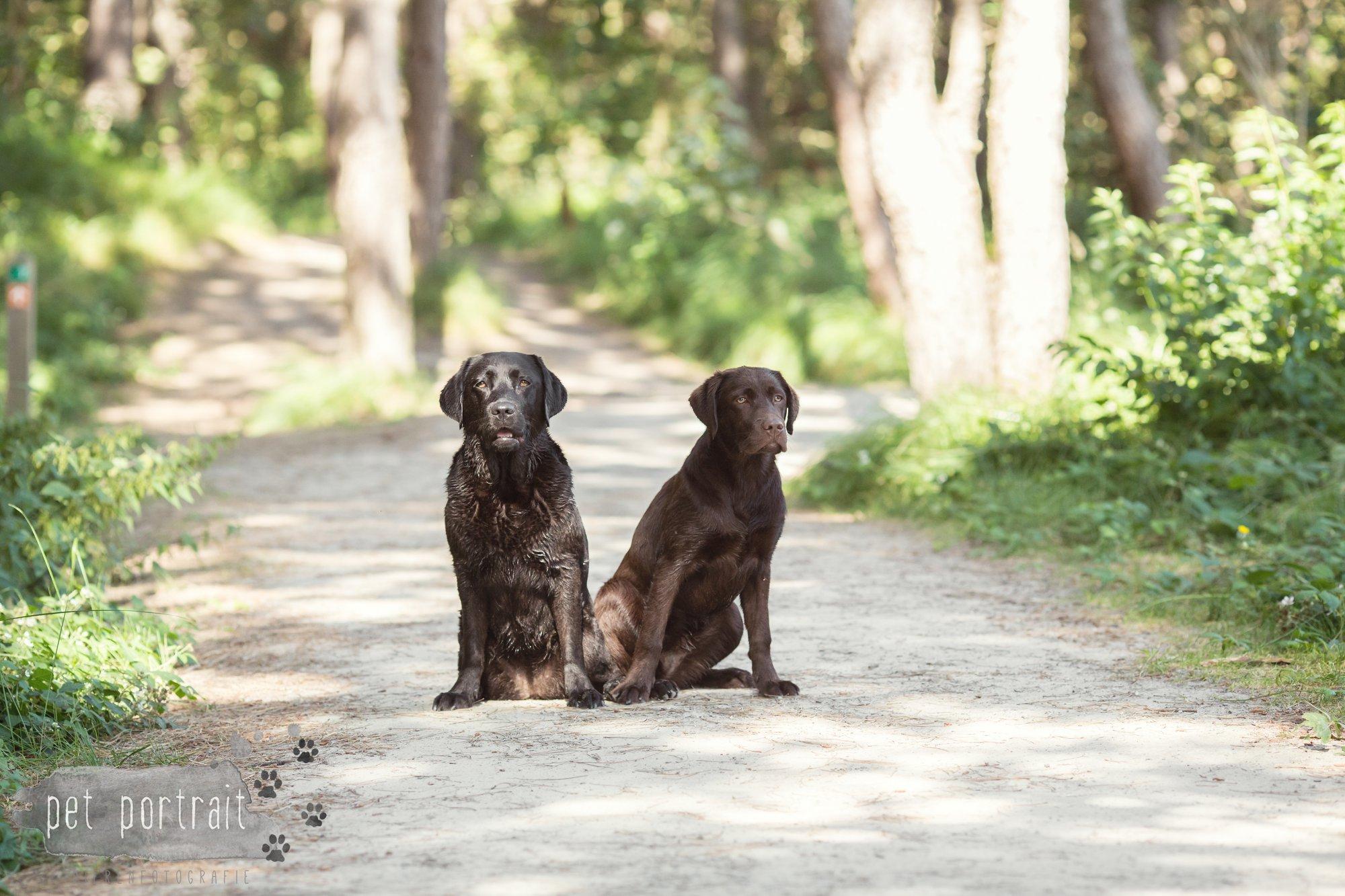 Hondenfotograaf Wassenaar - Fotoshoot voor Labrador retrievers-16