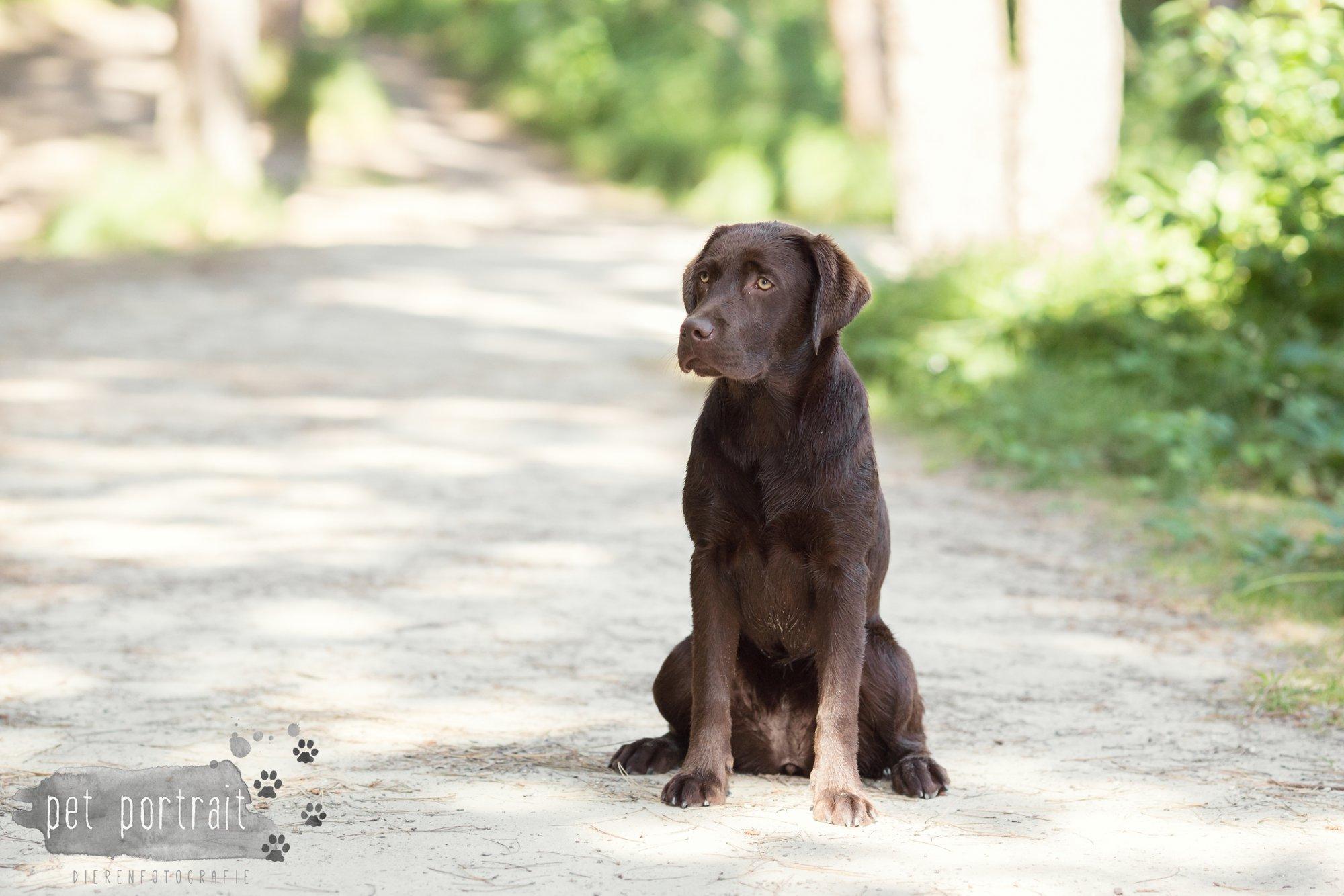 Hondenfotograaf Wassenaar - Fotoshoot voor Labrador retrievers-18