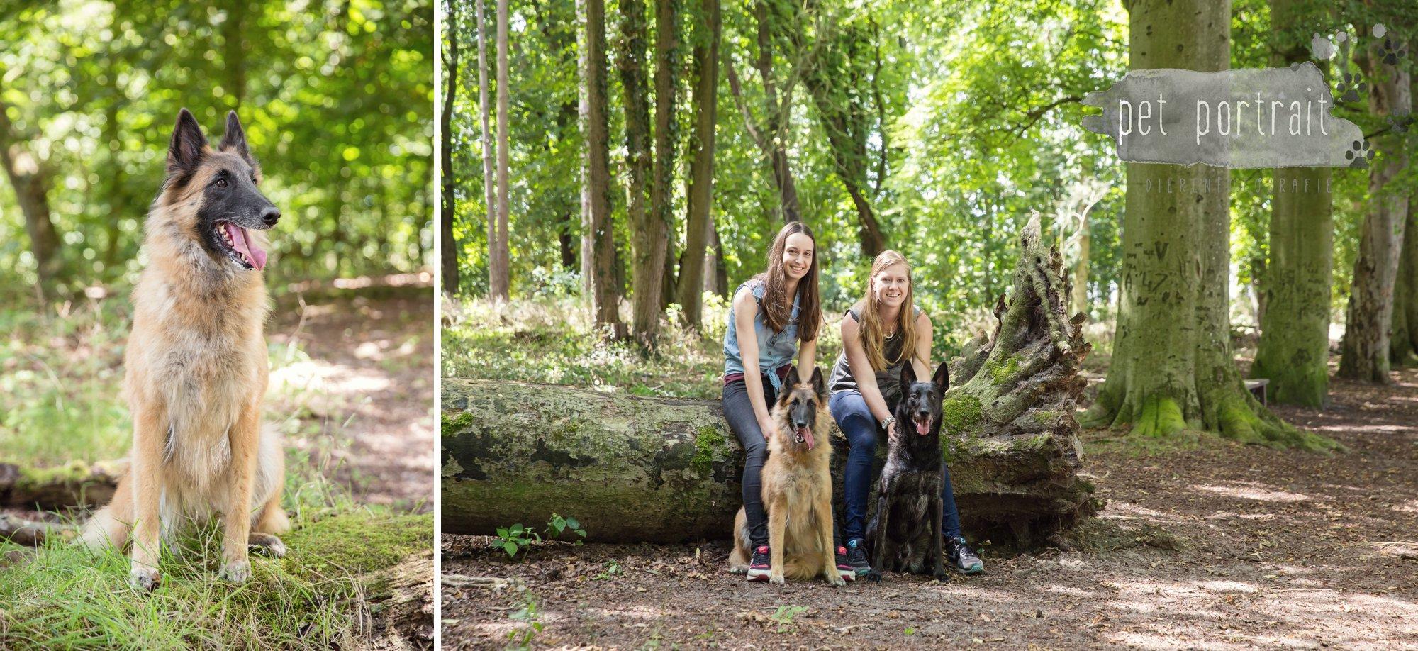 Hondenfotograaf Heemstede - Hollandse Herder en Tervuerense Herder-6