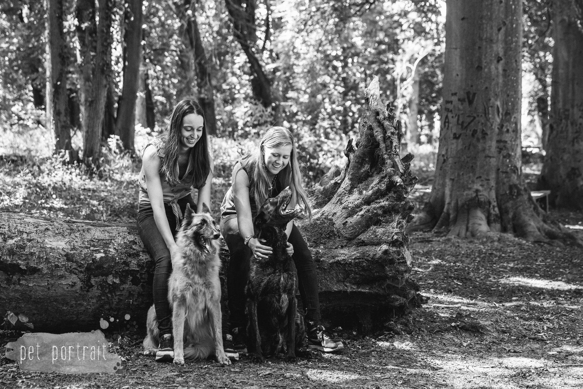 Hondenfotograaf Heemstede - Hollandse Herder en Tervuerense Herder-9