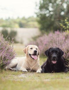 Dierenfotografie Tip - Ooghoogte