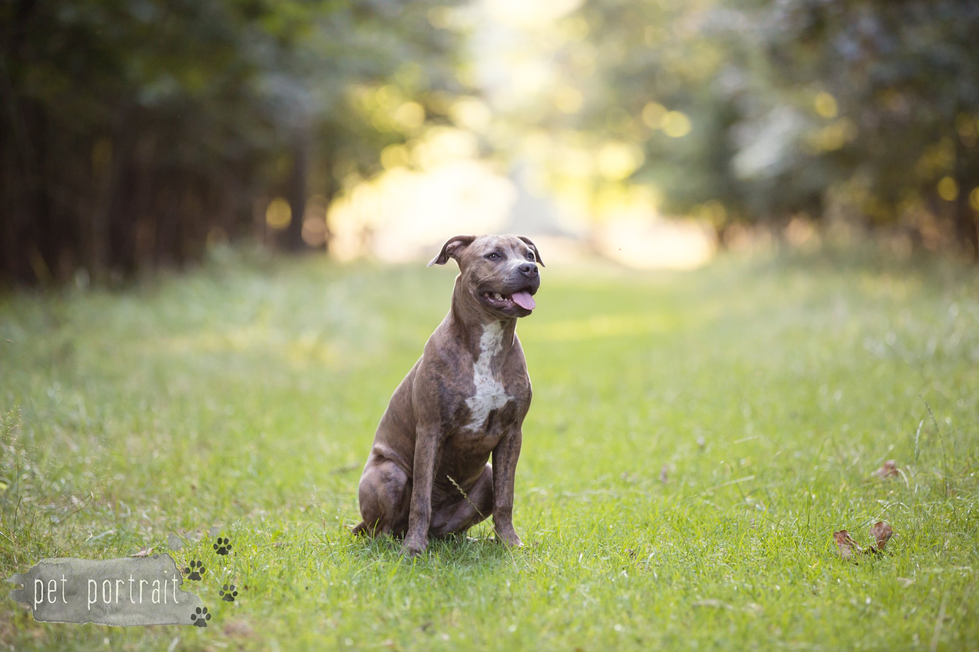 hondenfotograaf-noordwijkerhout-dier-en-baasje-fotoshoot-in-de-duinen-1