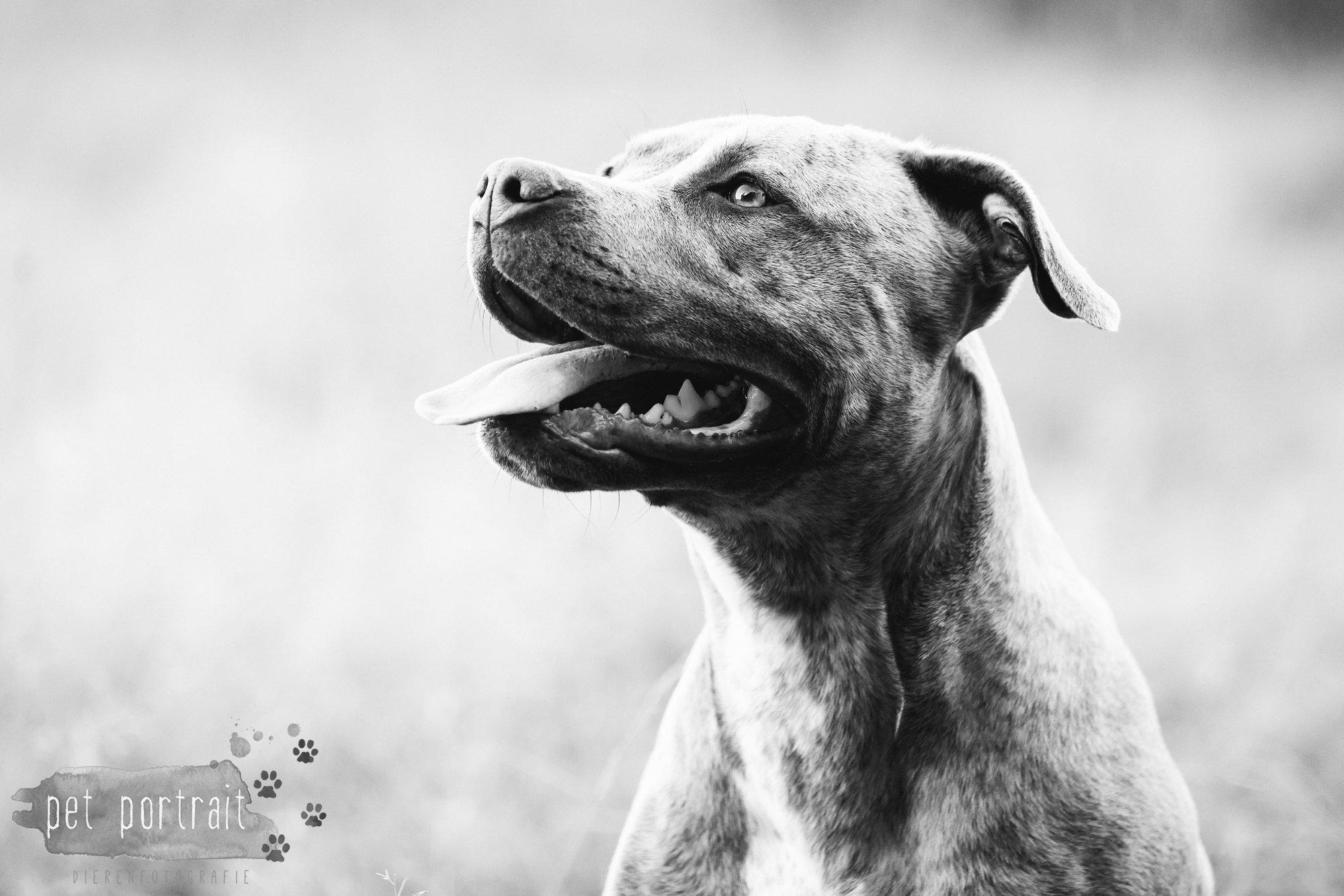 hondenfotograaf-noordwijkerhout-dier-en-baasje-fotoshoot-in-de-duinen-12