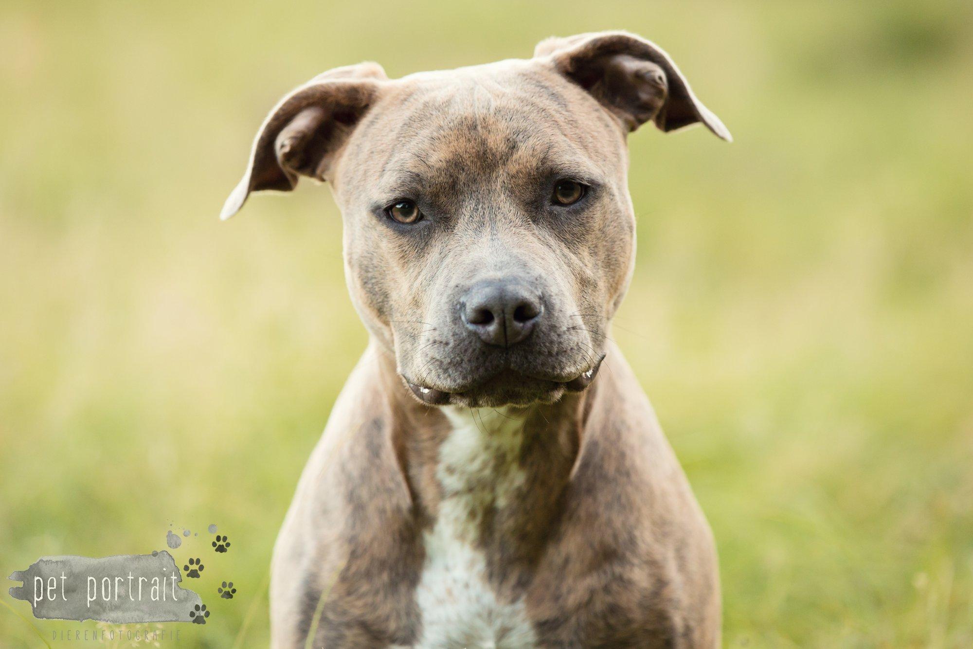 hondenfotograaf-noordwijkerhout-dier-en-baasje-fotoshoot-in-de-duinen-13