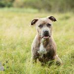 Hondenfotograaf Noordwijkerhout – Groei mee sessie 2 voor Noa