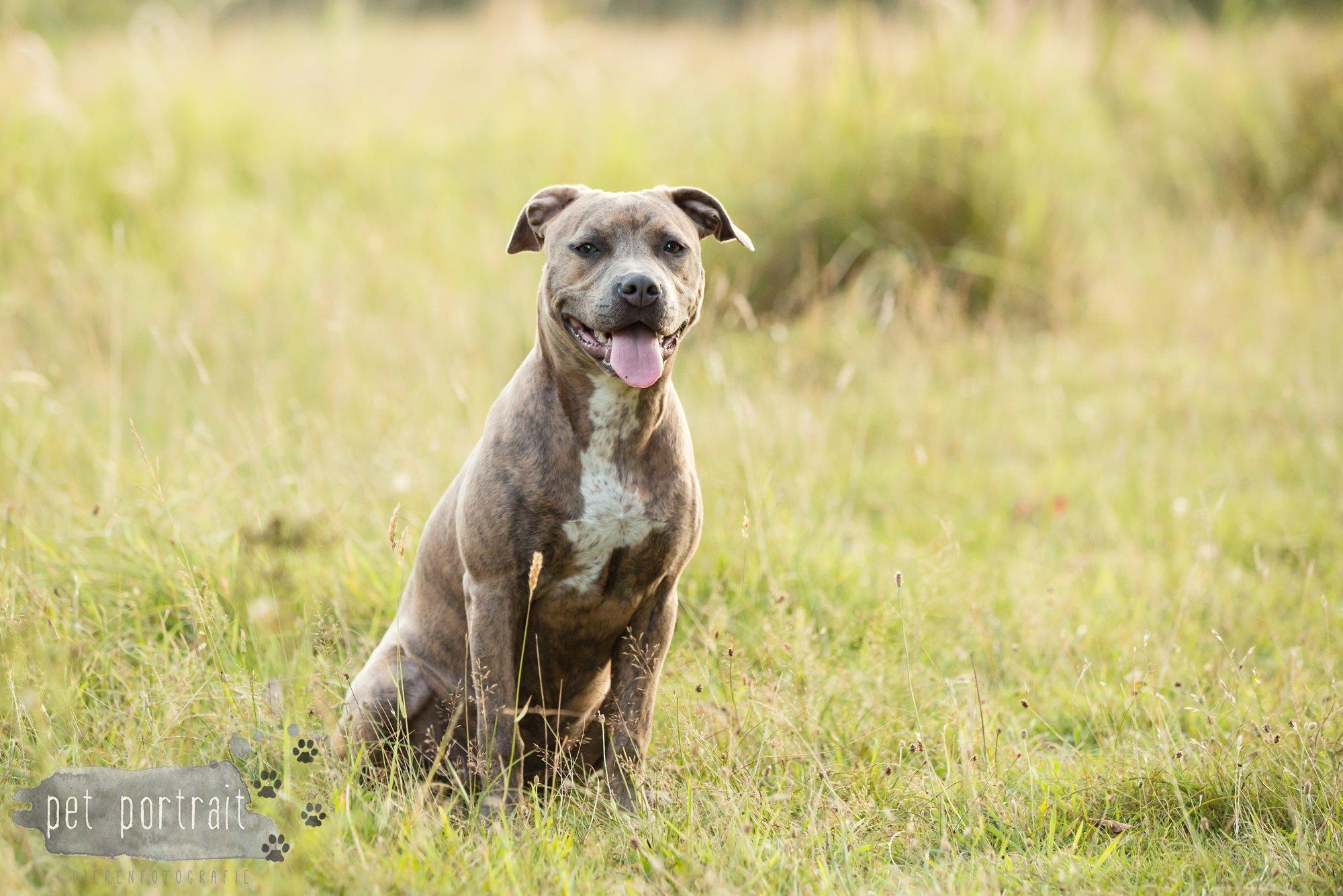 hondenfotograaf-noordwijkerhout-dier-en-baasje-fotoshoot-in-de-duinen-15