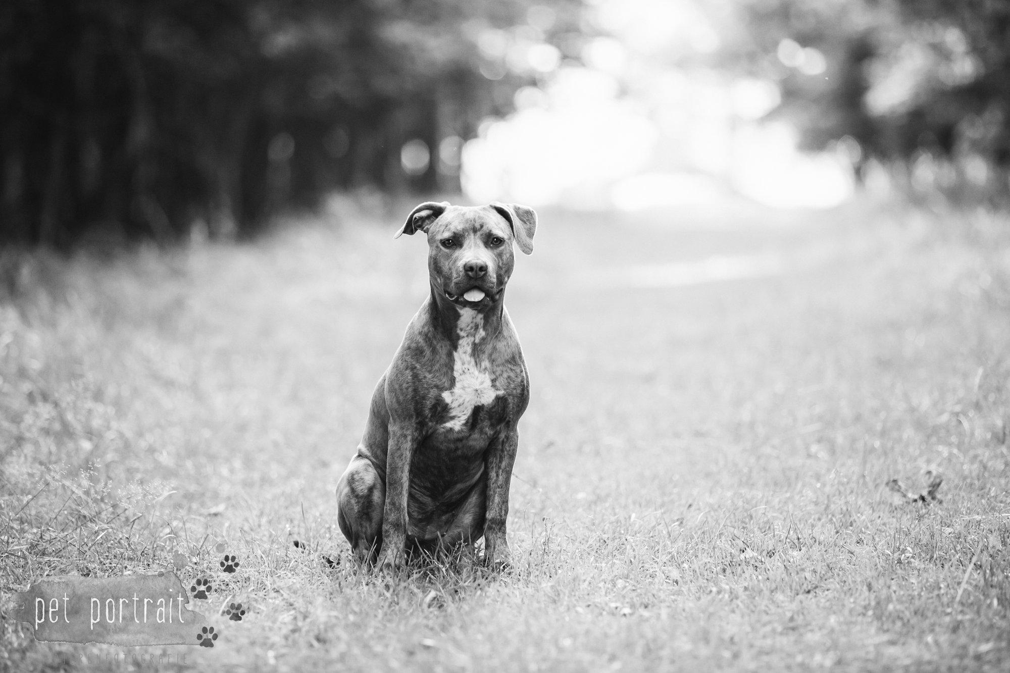 hondenfotograaf-noordwijkerhout-dier-en-baasje-fotoshoot-in-de-duinen-2