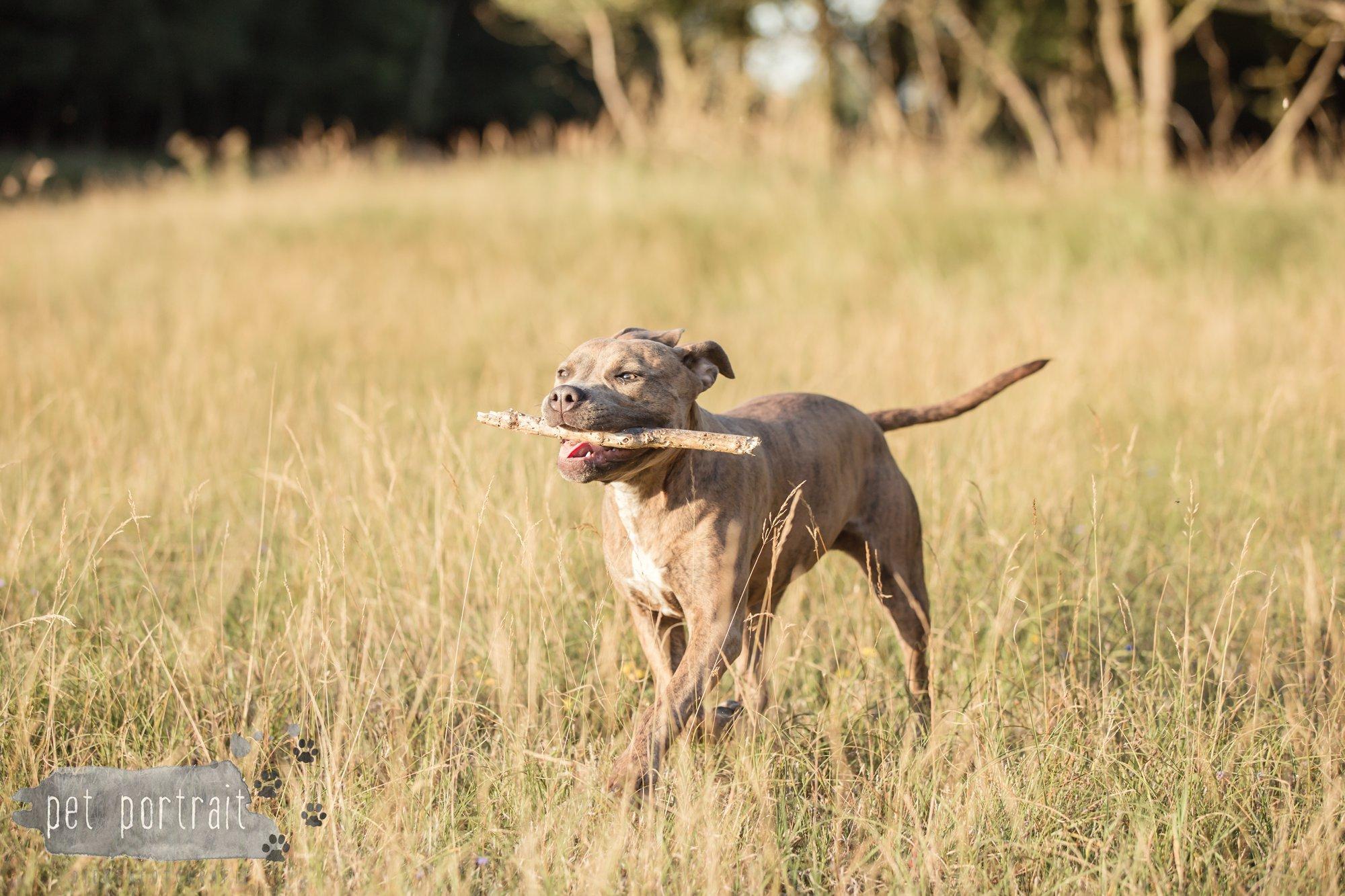 hondenfotograaf-noordwijkerhout-dier-en-baasje-fotoshoot-in-de-duinen-3