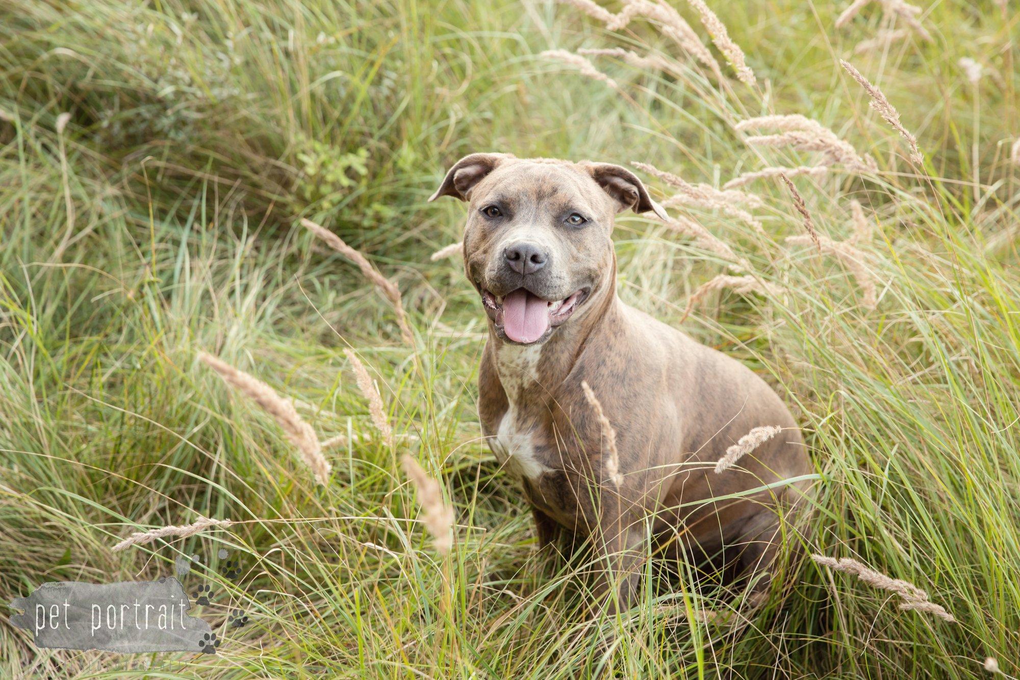hondenfotograaf-noordwijkerhout-dier-en-baasje-fotoshoot-in-de-duinen-6
