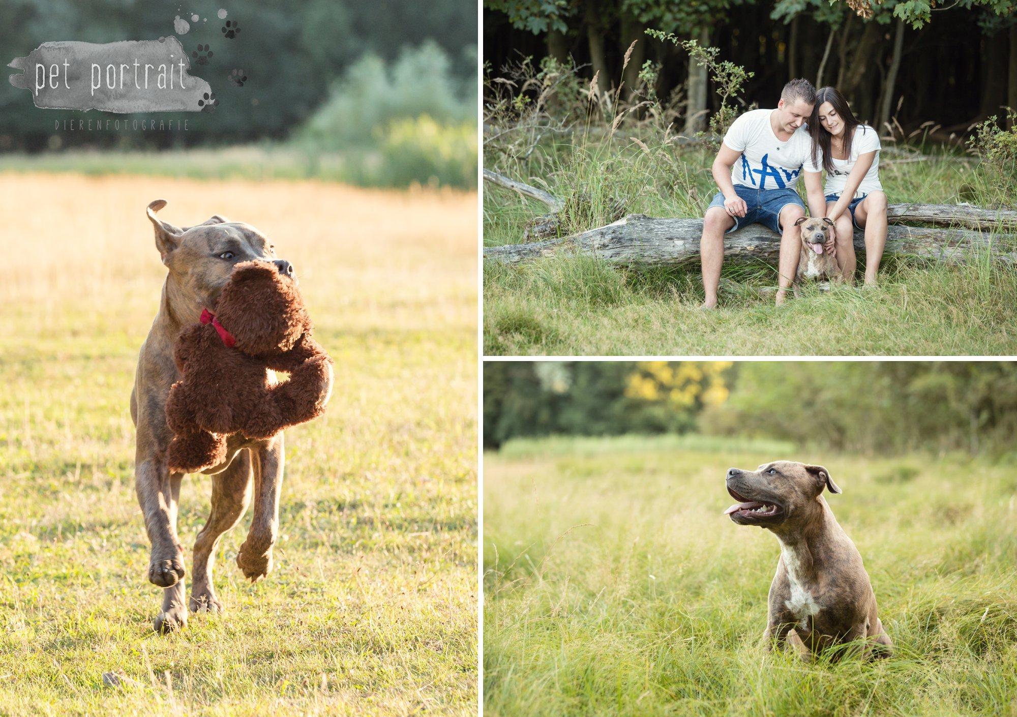hondenfotograaf-noordwijkerhout-dier-en-baasje-fotoshoot-in-de-duinen-9