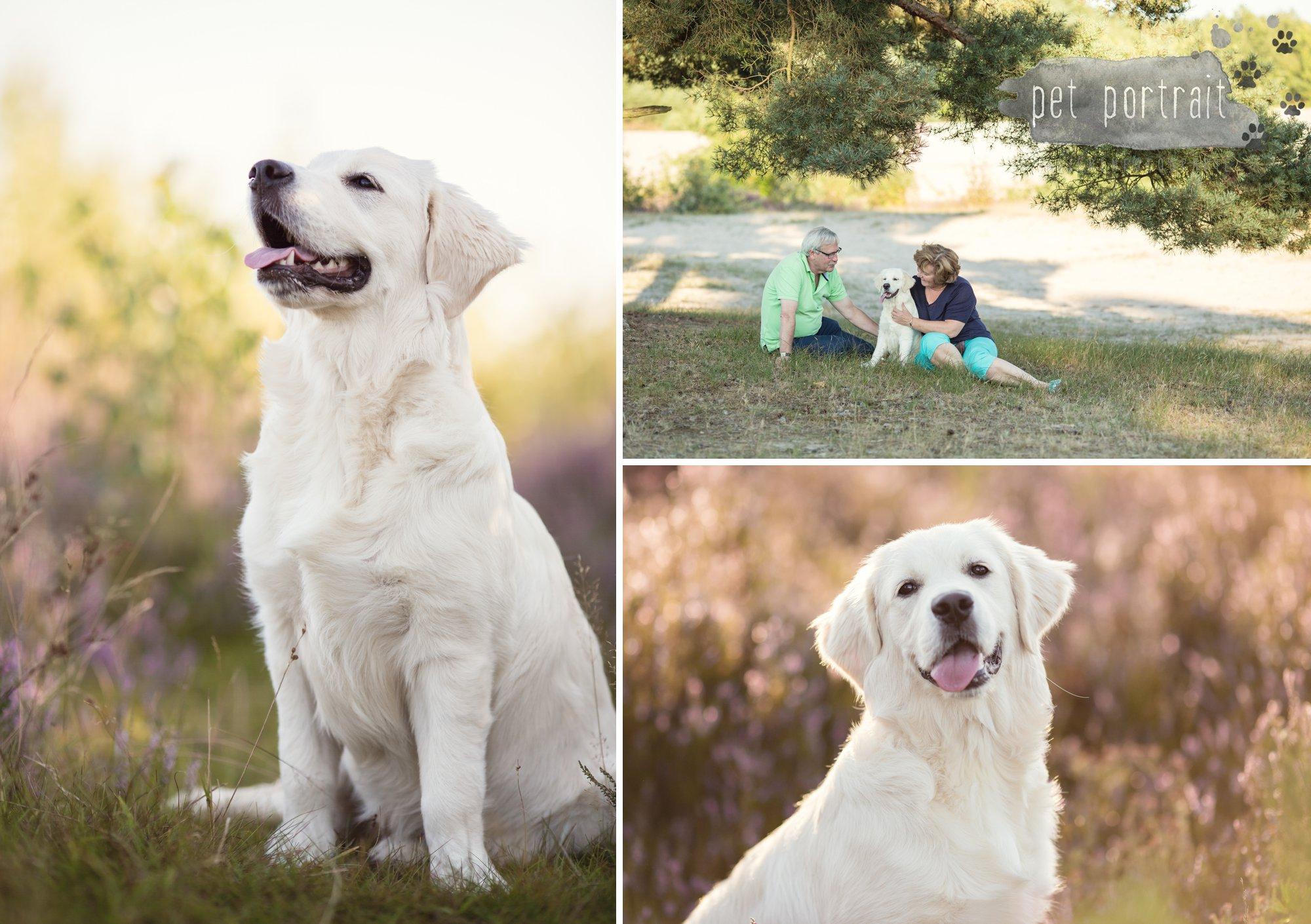 hondenfotograaf-soest-hondenfotoshoot-golden-retriever-2