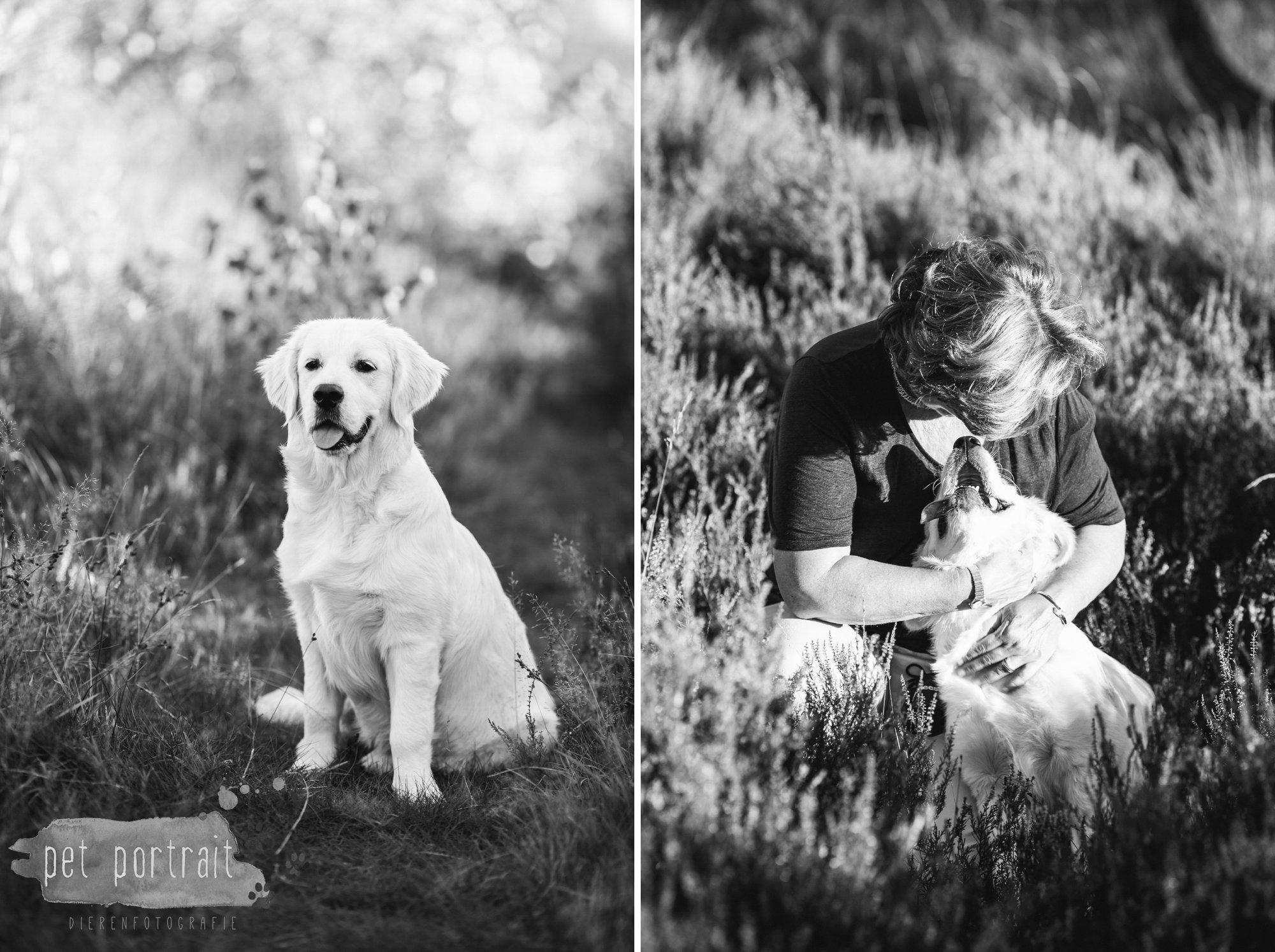 hondenfotograaf-soest-hondenfotoshoot-golden-retriever-3