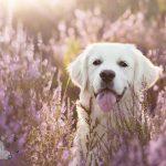 Dierenfotografie Tip - Voorgrond