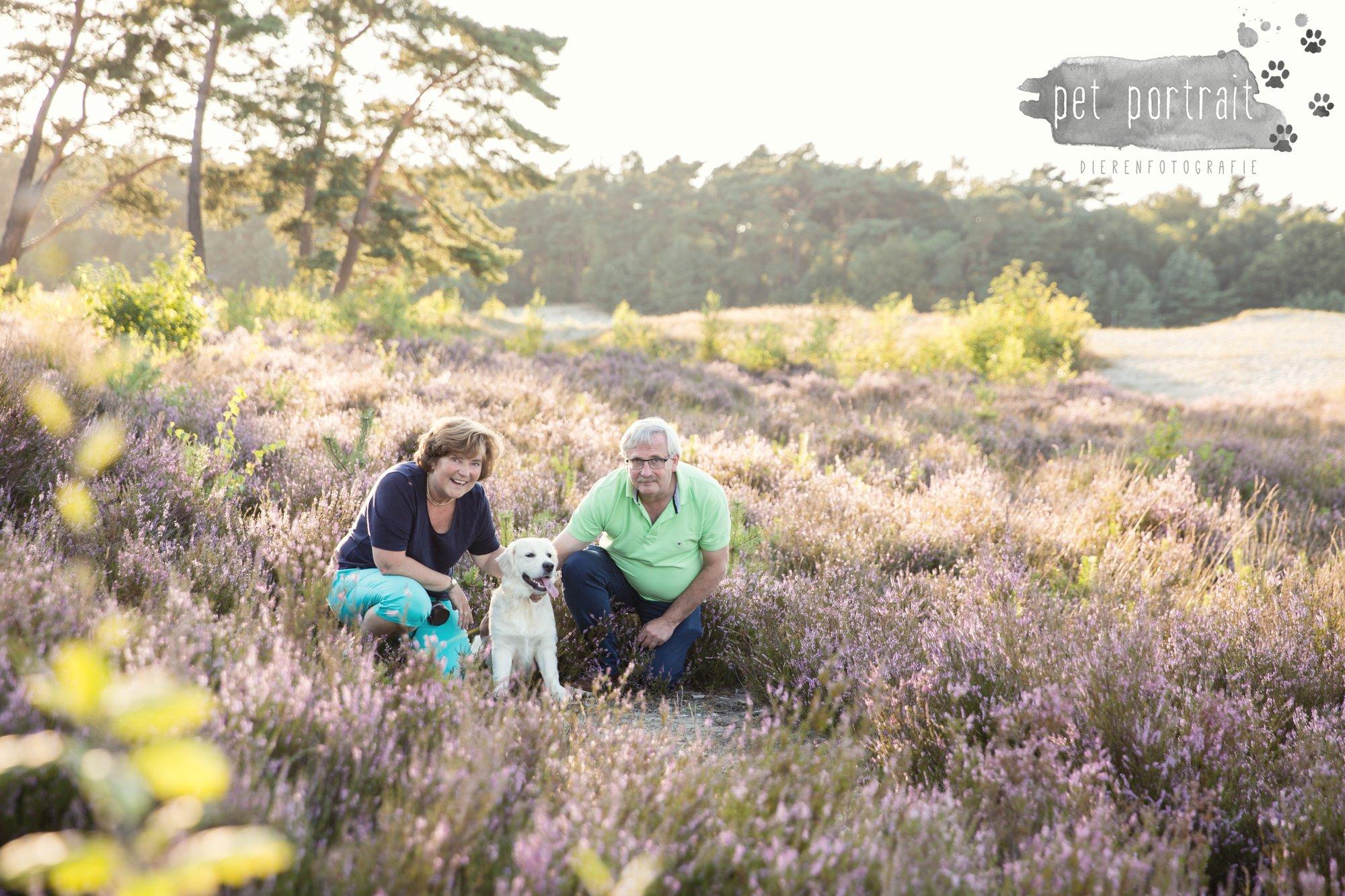 hondenfotograaf-soest-hondenfotoshoot-golden-retriever-8