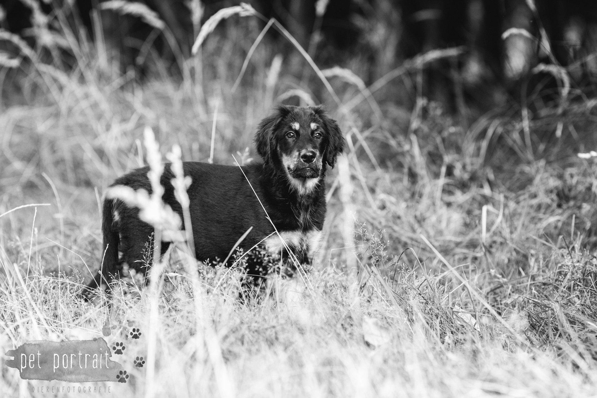 hondenfotograaf-noordwijkerhout-groei-mee-sessie-1-voor-sam-10