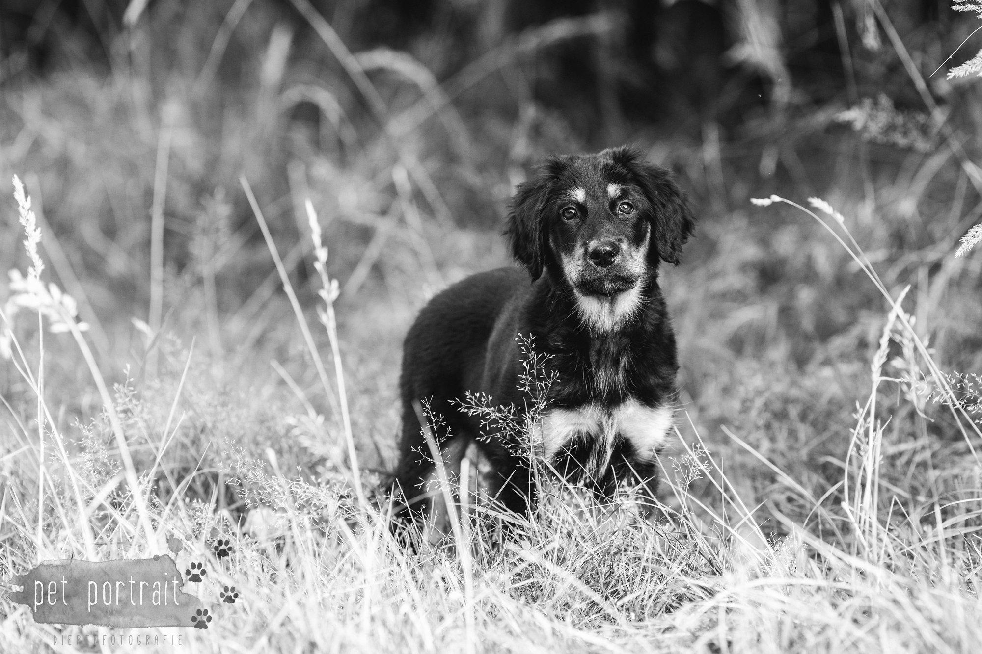 hondenfotograaf-noordwijkerhout-groei-mee-sessie-1-voor-sam-12
