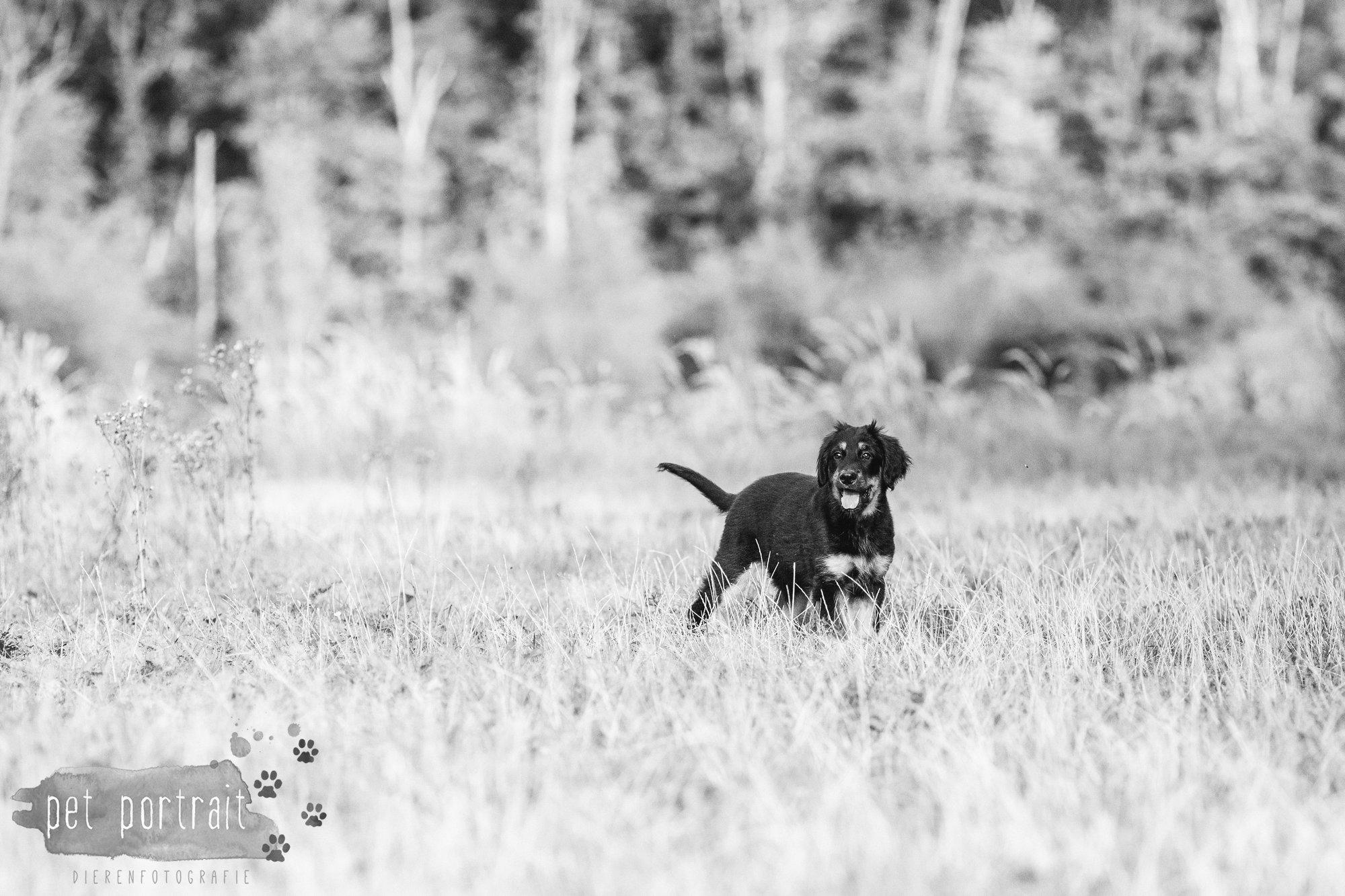 hondenfotograaf-noordwijkerhout-groei-mee-sessie-1-voor-sam-13