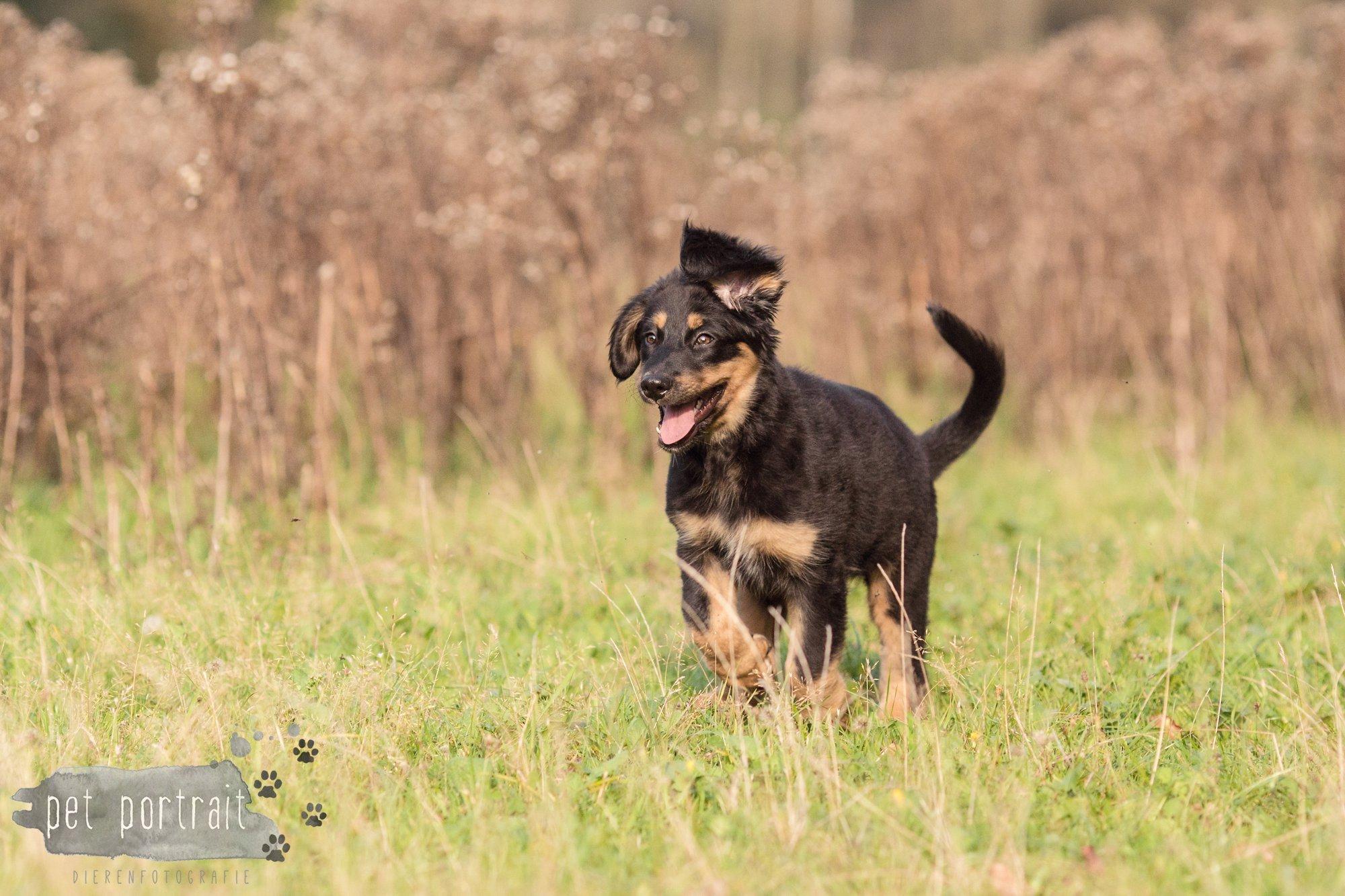 hondenfotograaf-noordwijkerhout-groei-mee-sessie-1-voor-sam-14