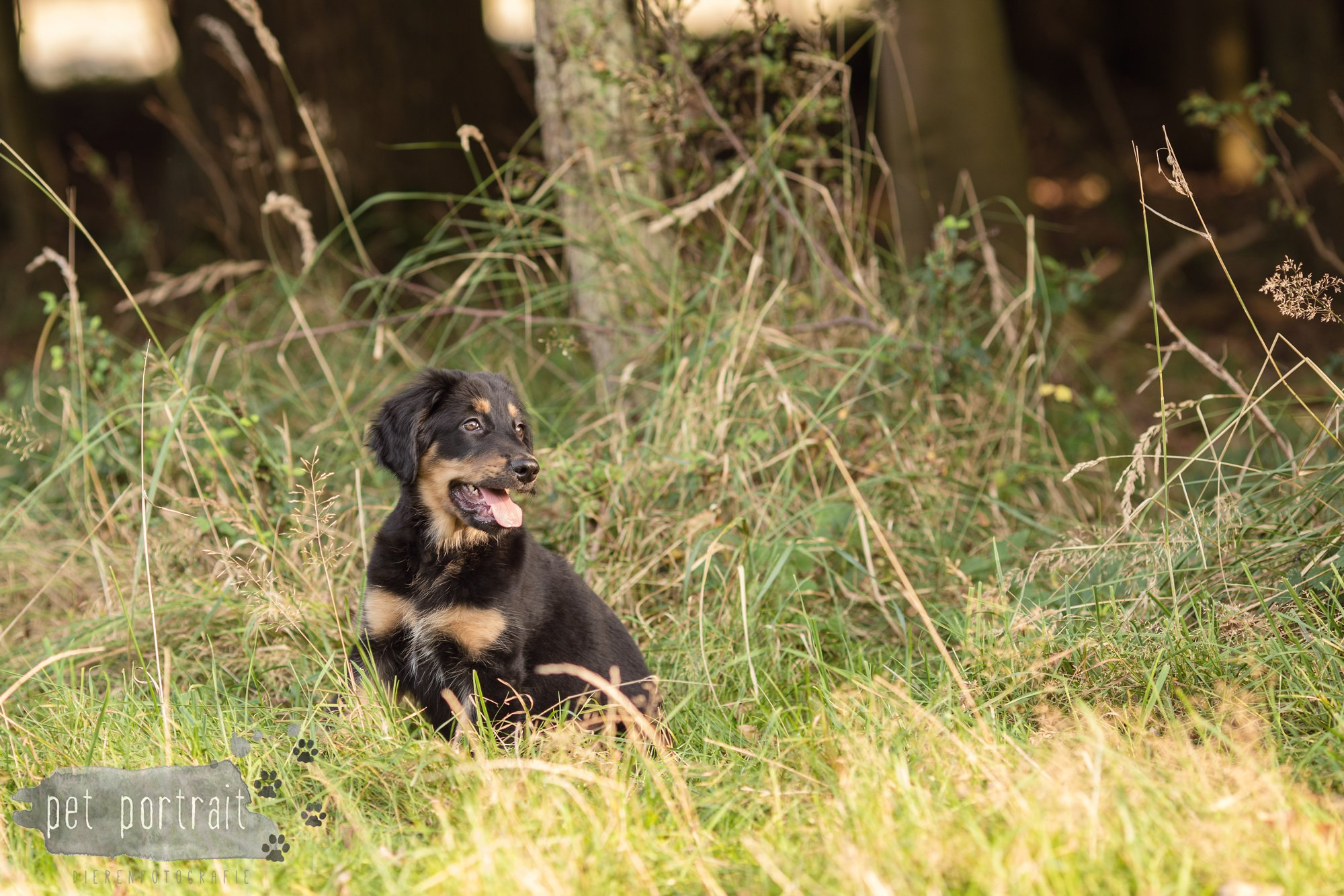 hondenfotograaf-noordwijkerhout-groei-mee-sessie-1-voor-sam-15