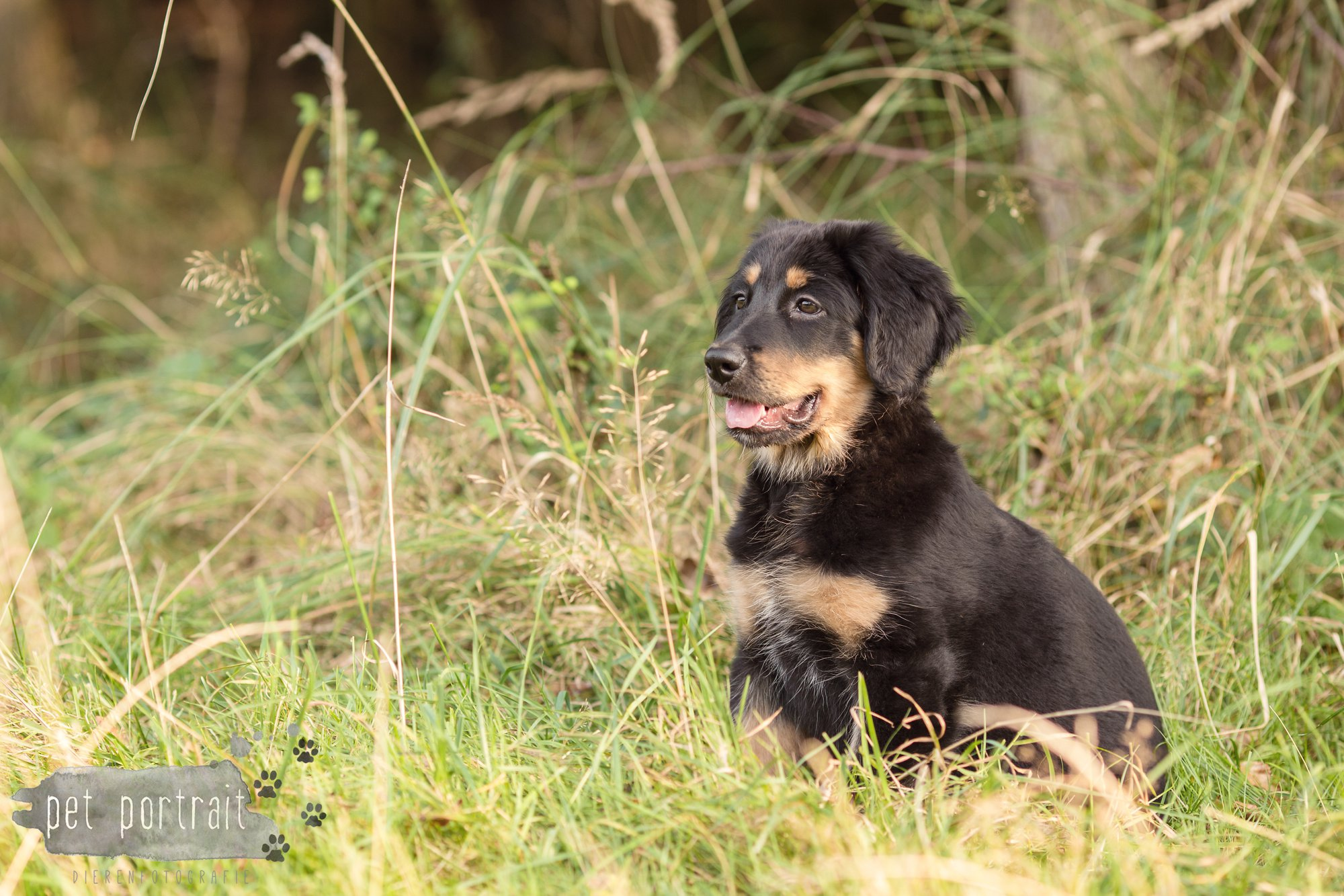 hondenfotograaf-noordwijkerhout-groei-mee-sessie-1-voor-sam-16