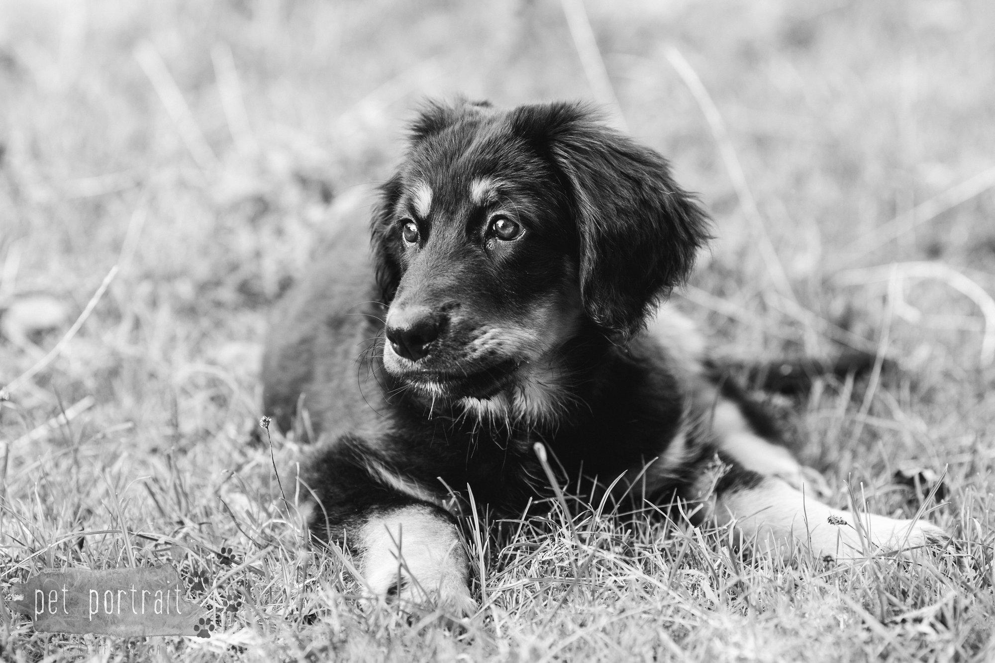 hondenfotograaf-noordwijkerhout-groei-mee-sessie-1-voor-sam-18