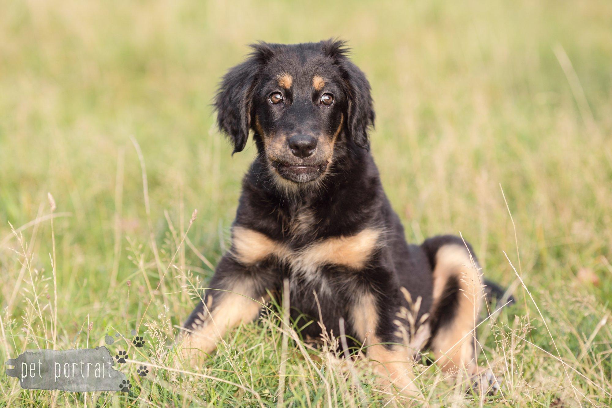 hondenfotograaf-noordwijkerhout-groei-mee-sessie-1-voor-sam-2