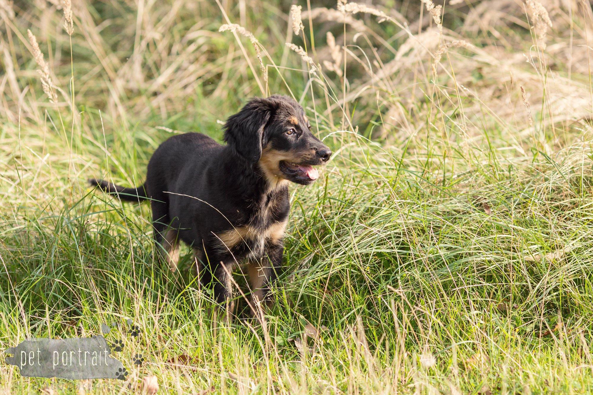 hondenfotograaf-noordwijkerhout-groei-mee-sessie-1-voor-sam-5