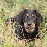 Hondenfotograaf Noordwijkerhout - Groei mee sessie 1 voor Sam