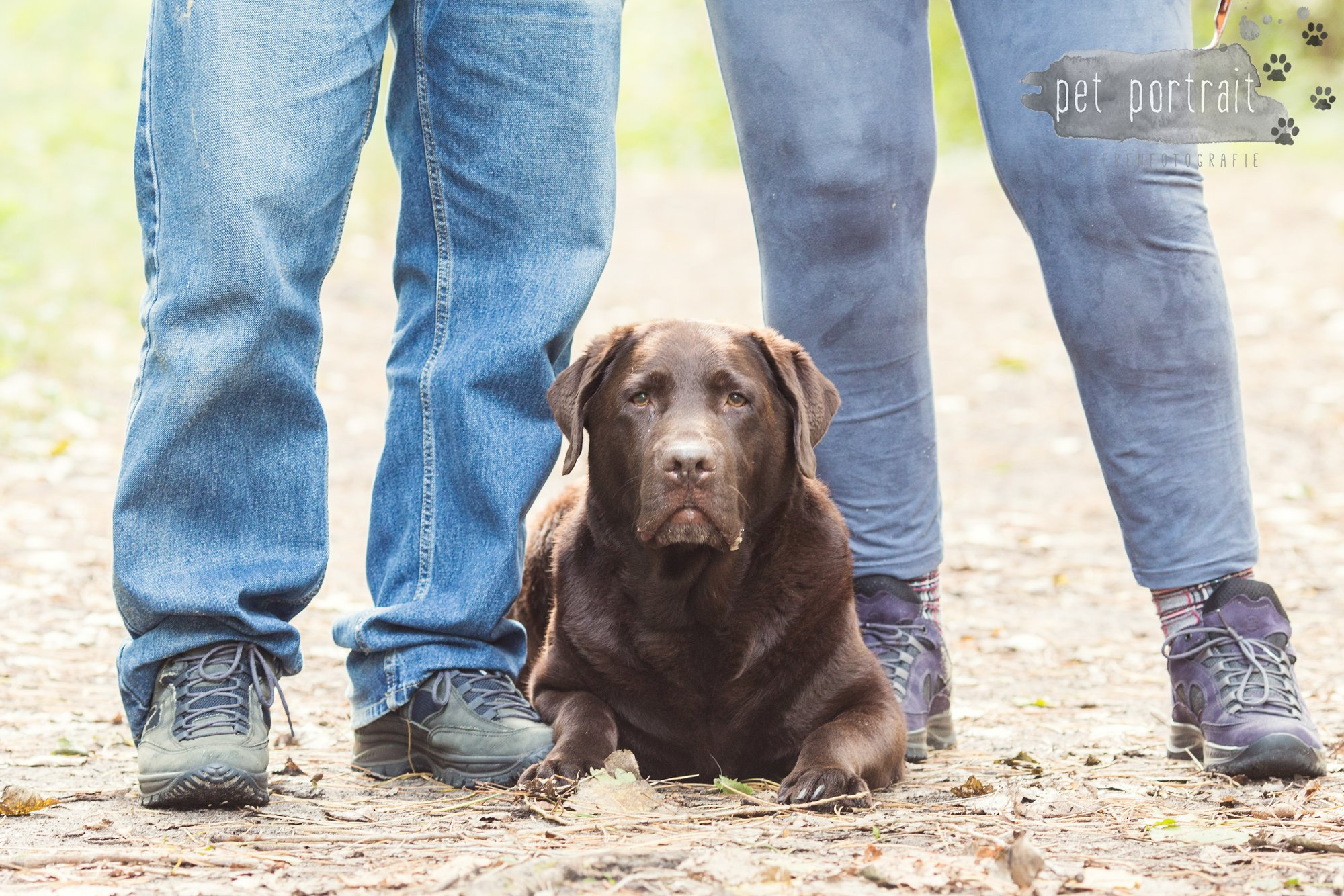 hondenfotograaf-wassenaar-labrador-bikkel-8
