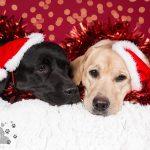 Prettige Feestdagen van Pet Portrait Dierenfotografie