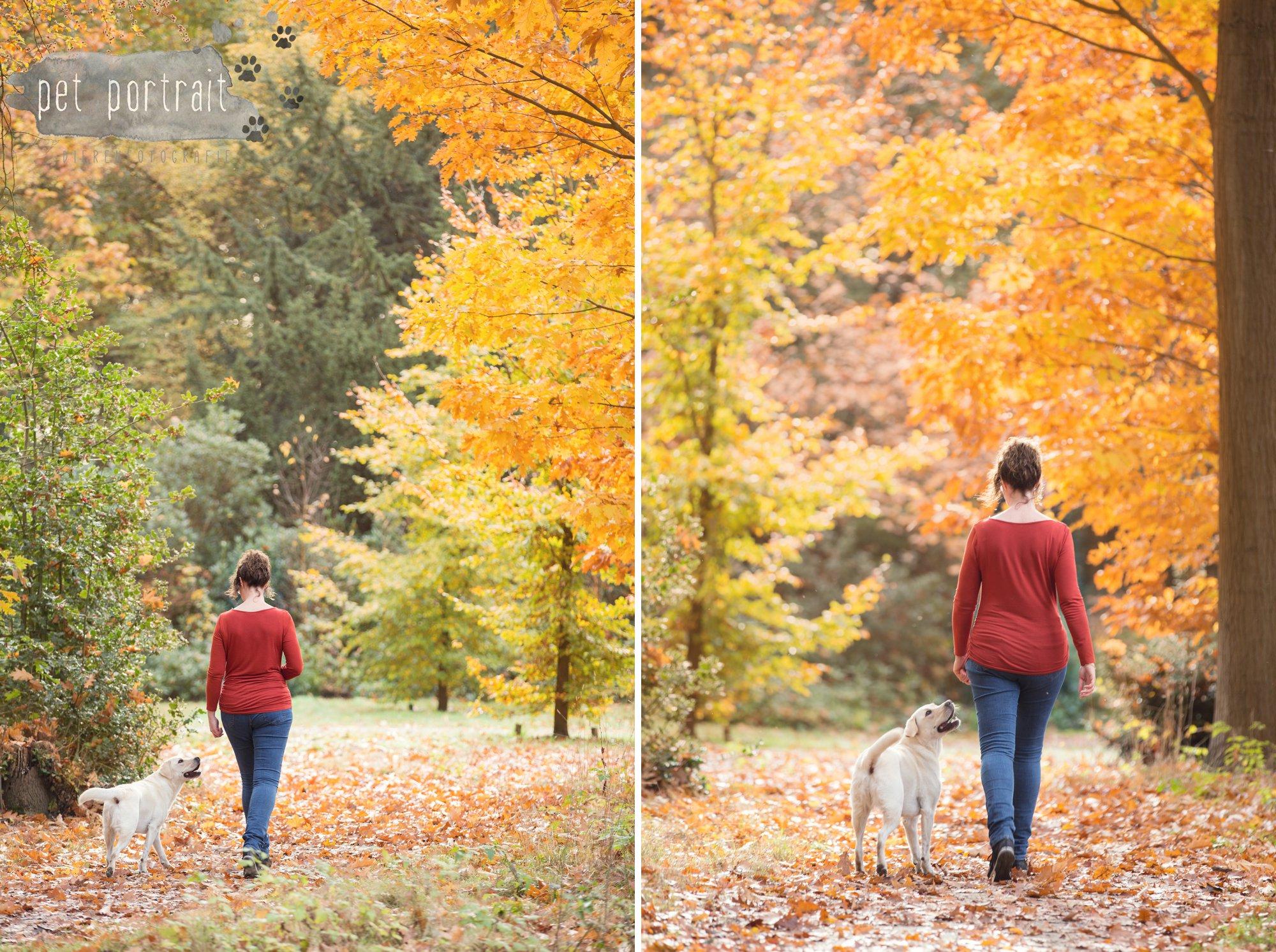 hondenfotograaf-s-graveland-beloved-dier-en-baasje-fotoshoot-labrador-juul-11