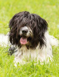 Hondenfotograaf Vogelenzang - Dier en Baasje fotoshoot in het bos