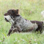 Hondenfotograaf Haaften - MAP 5 Continentalen