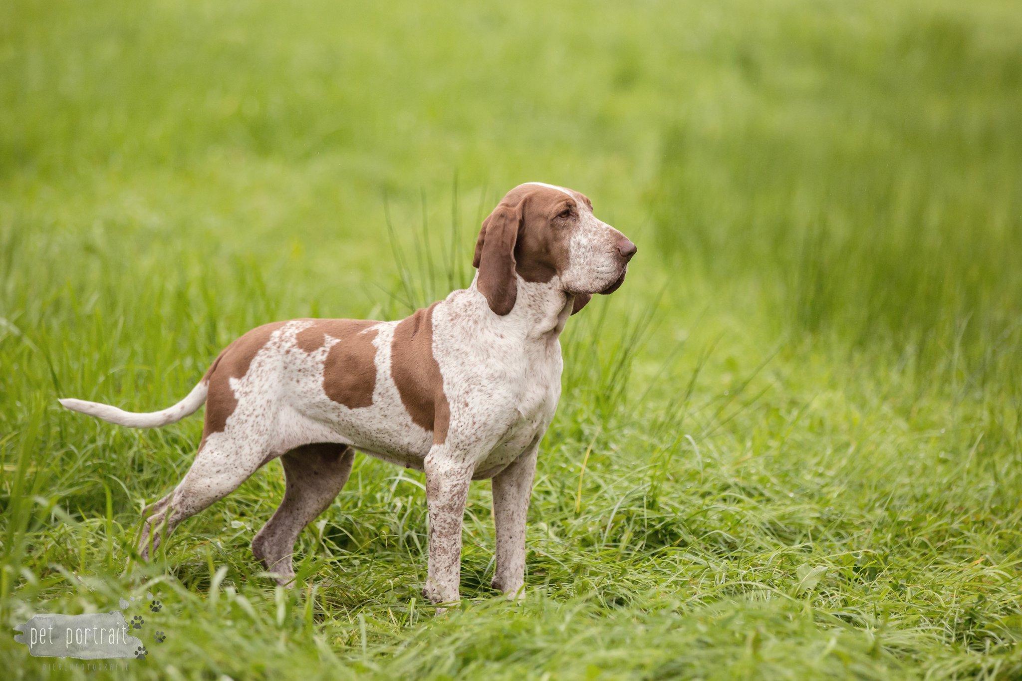 Hondenfotograaf Langbroek - MAP Hindersteyn
