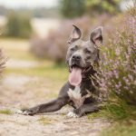 Hondenfotograaf Soest - Fotoshoot bij de Soesterduinen